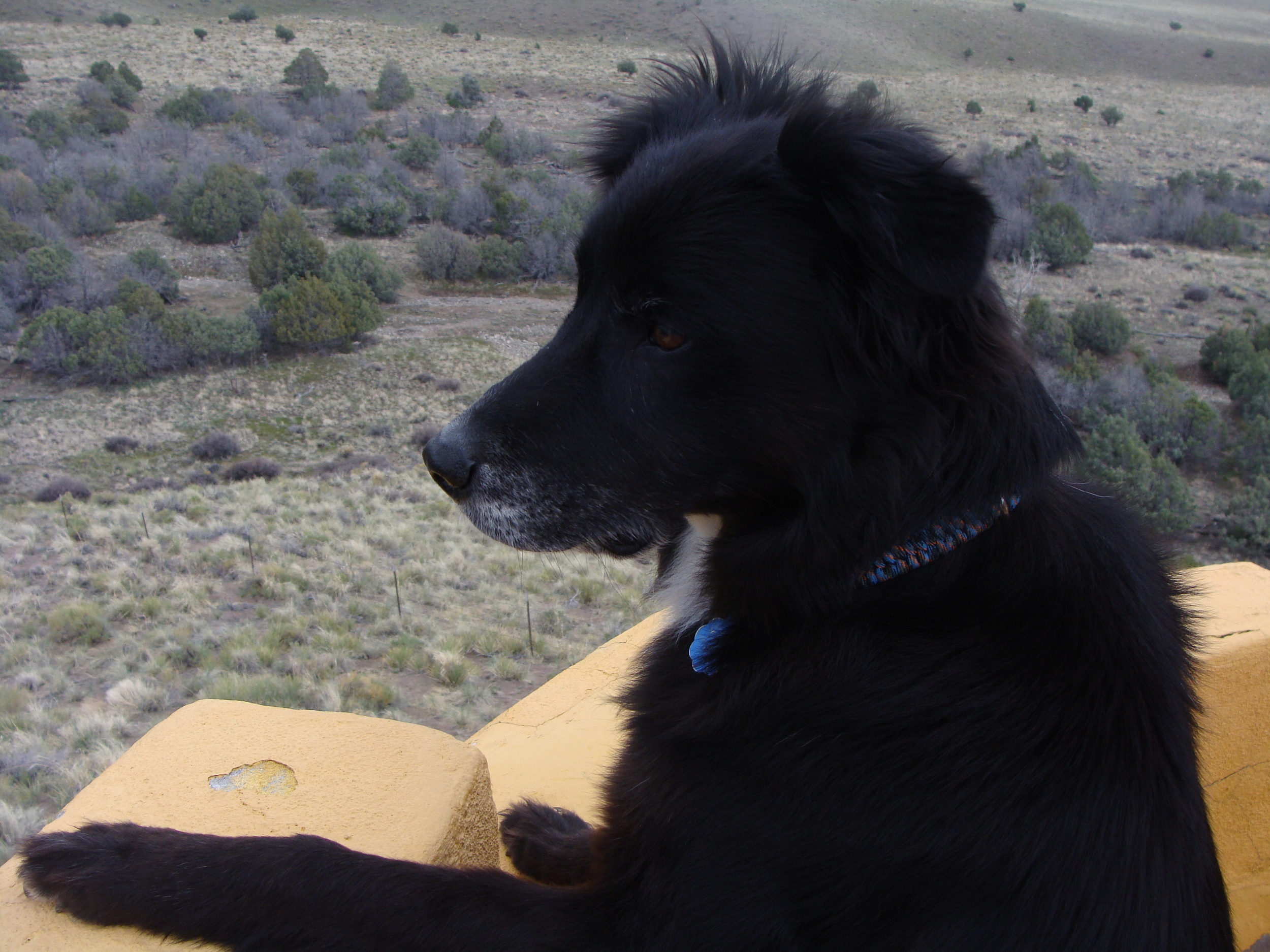 Luke enjoys the scenery from our hike to the Ziggurat while he contemplates the state of our world