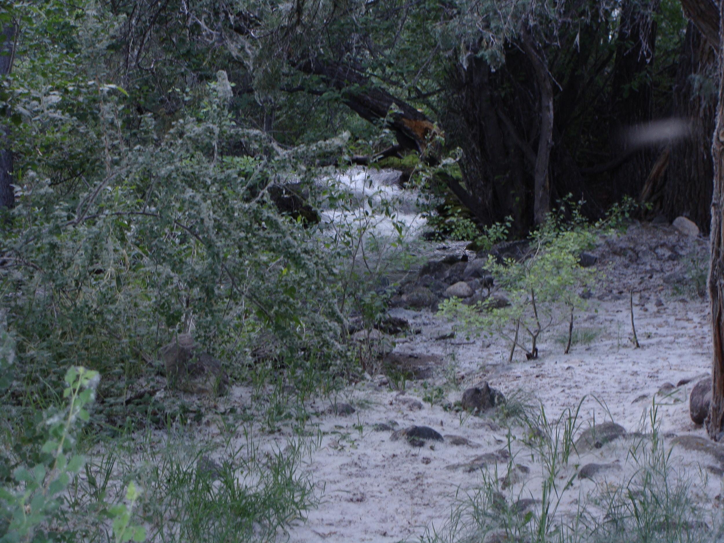 Cottonwood 'snow' on Cottonwood Creek. Ah, summer in the Sangres!