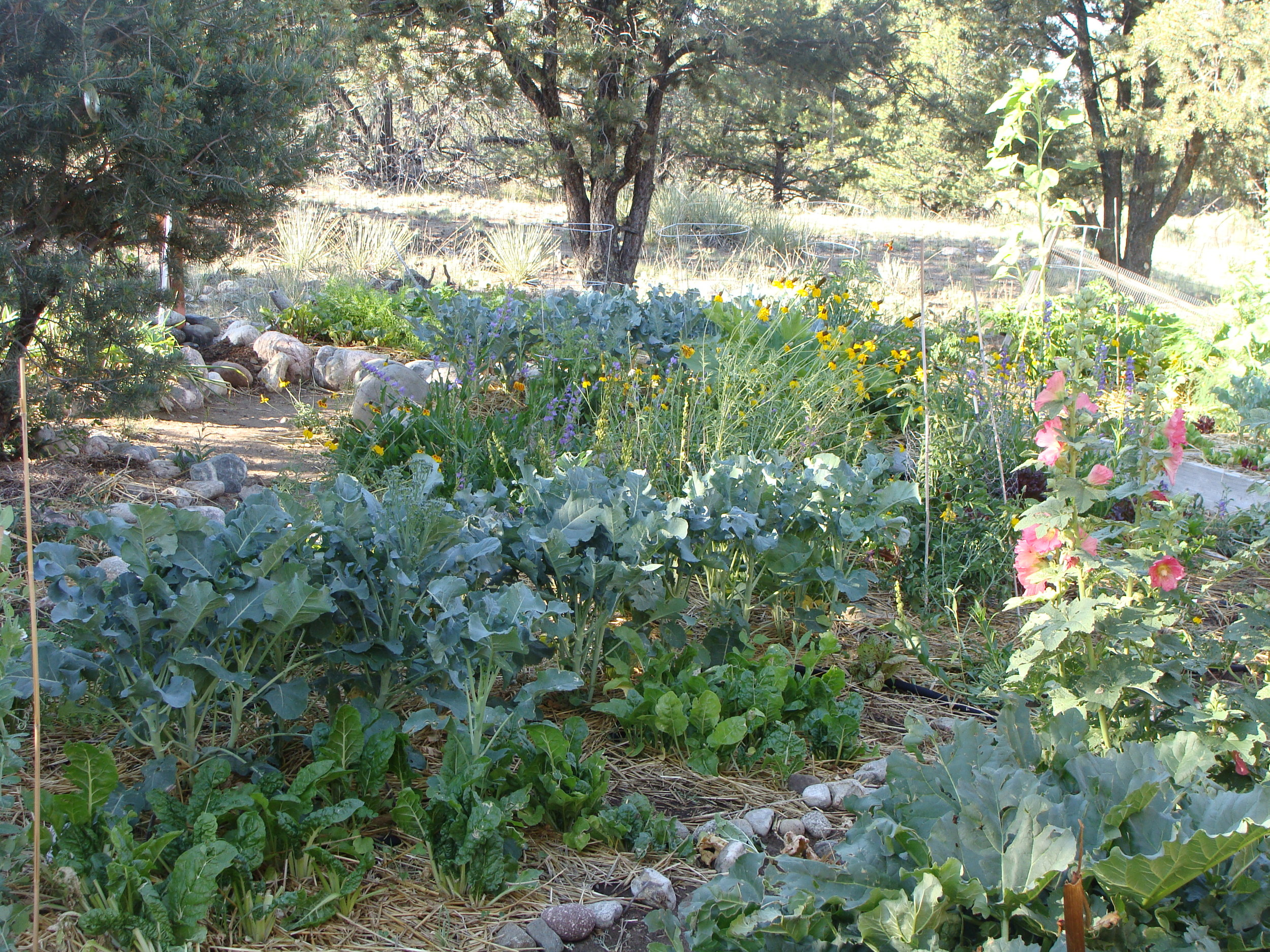 The garden   offers a visual feast to match the bounty of our harvests.