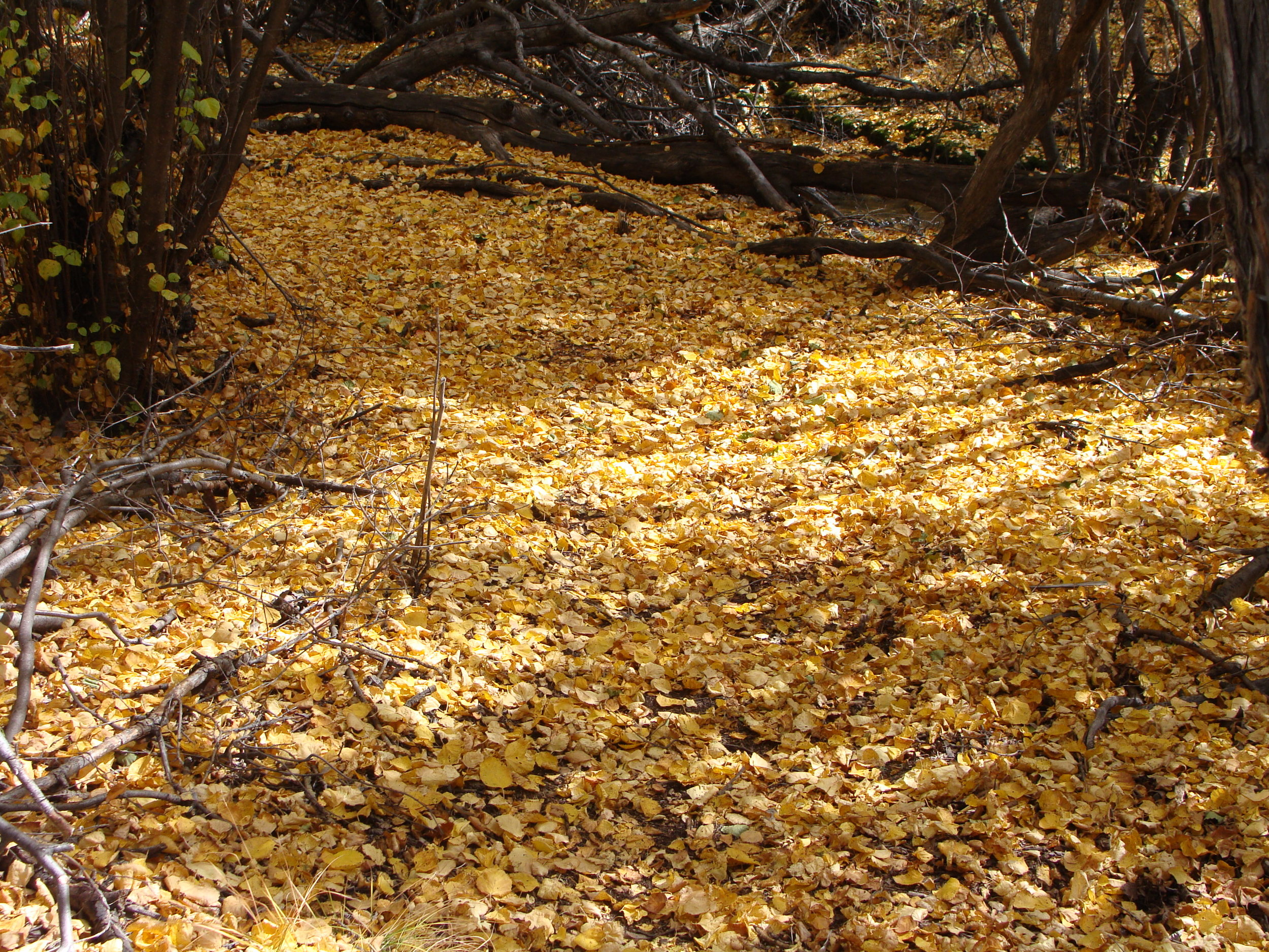 May All Your   Paths Be Paved With Gold!