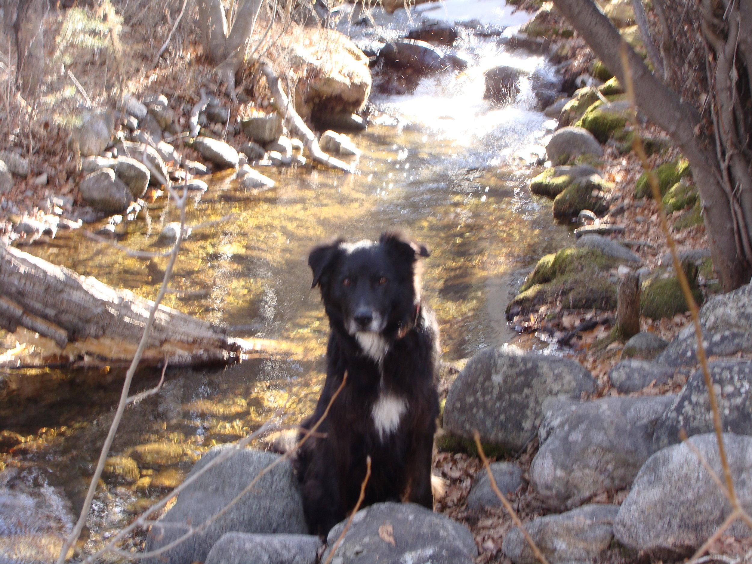 A few of my favorite things -- Cool Hand Luke, Cottonwood Creek, and a beautiful crisp morning!