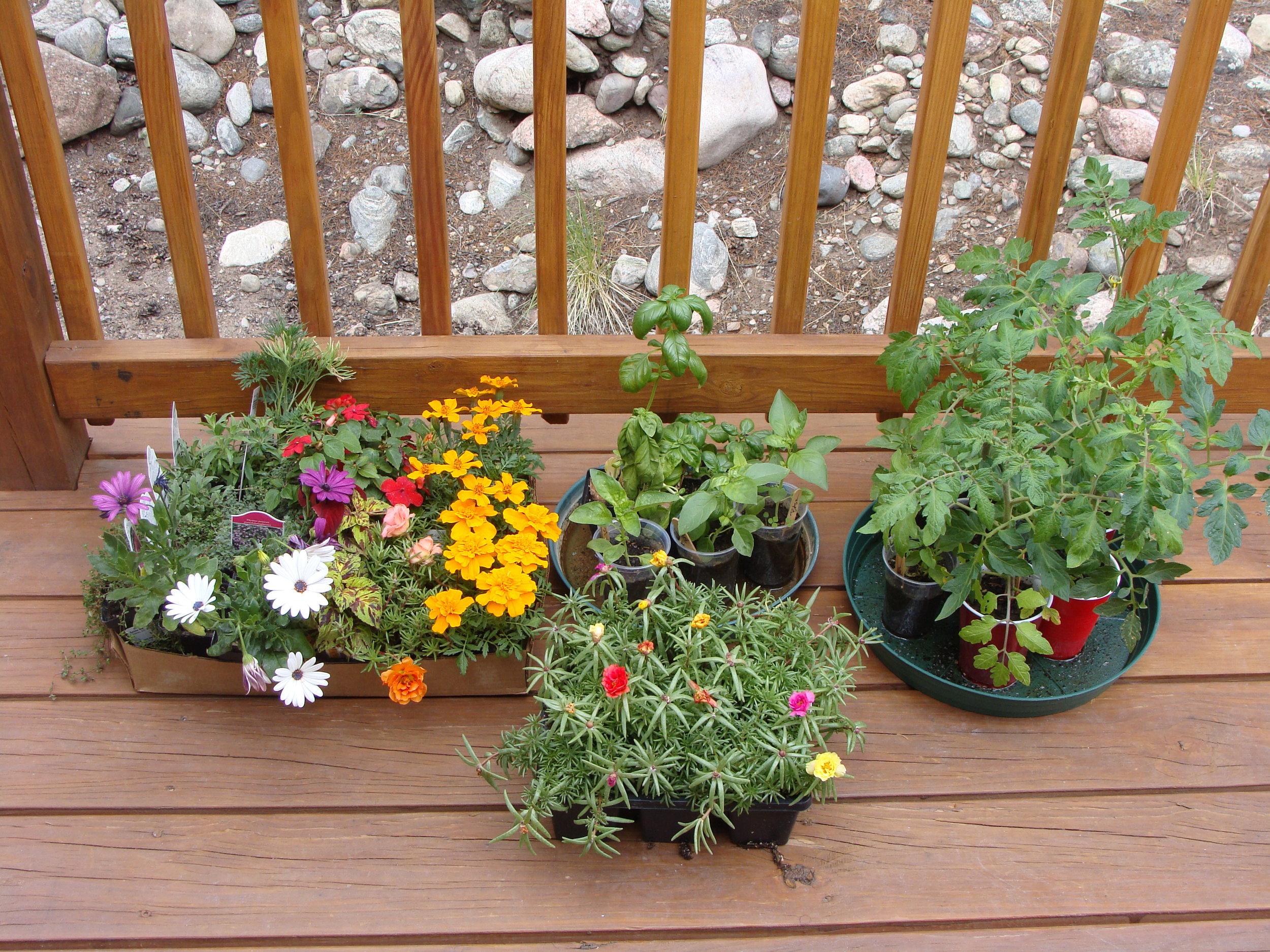 Plants ready (check), blog posted (check) ... ready, set, PLANT!