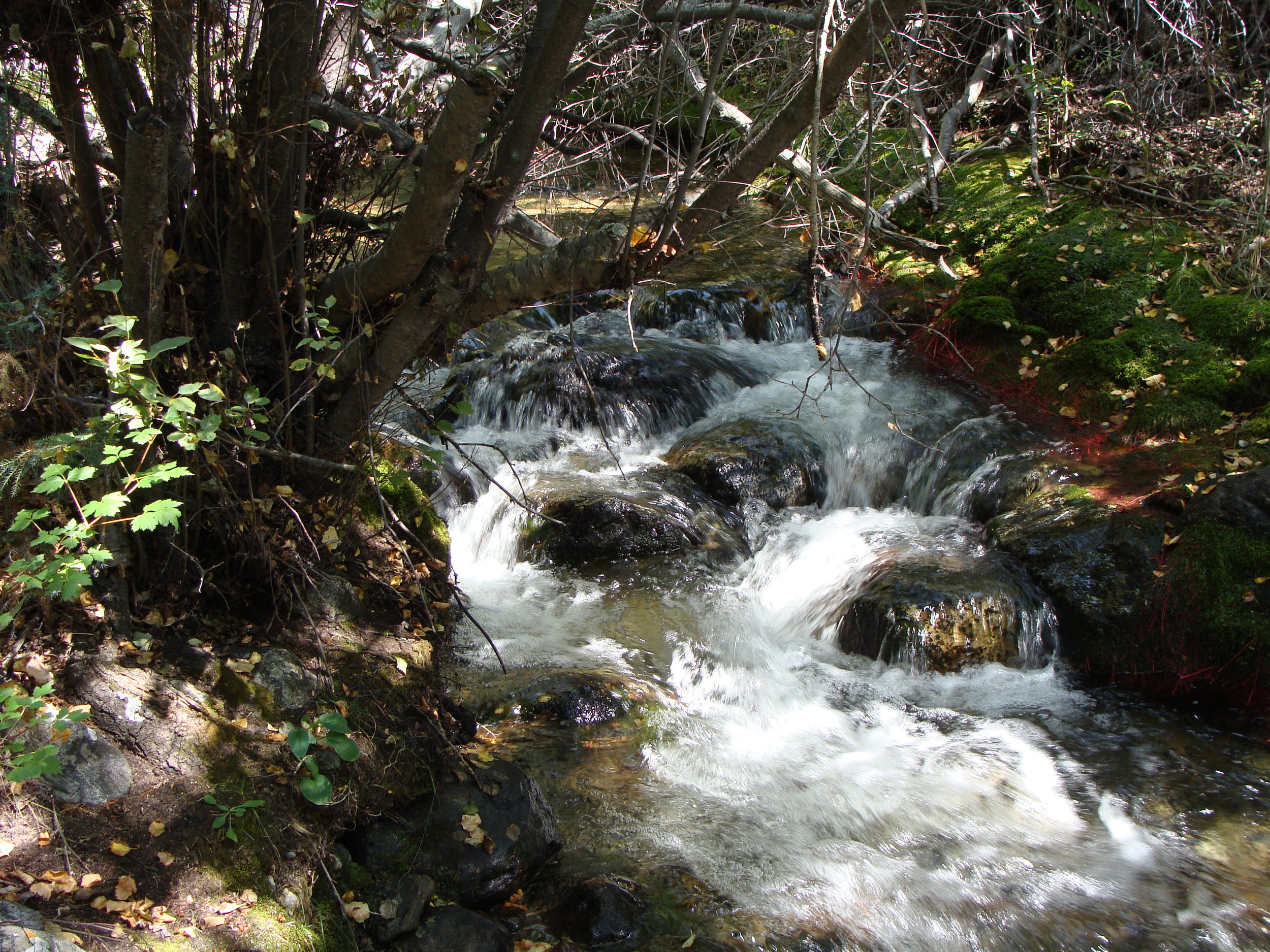 I love being under the influence of the visual and audible beauty of a mountain stream ...