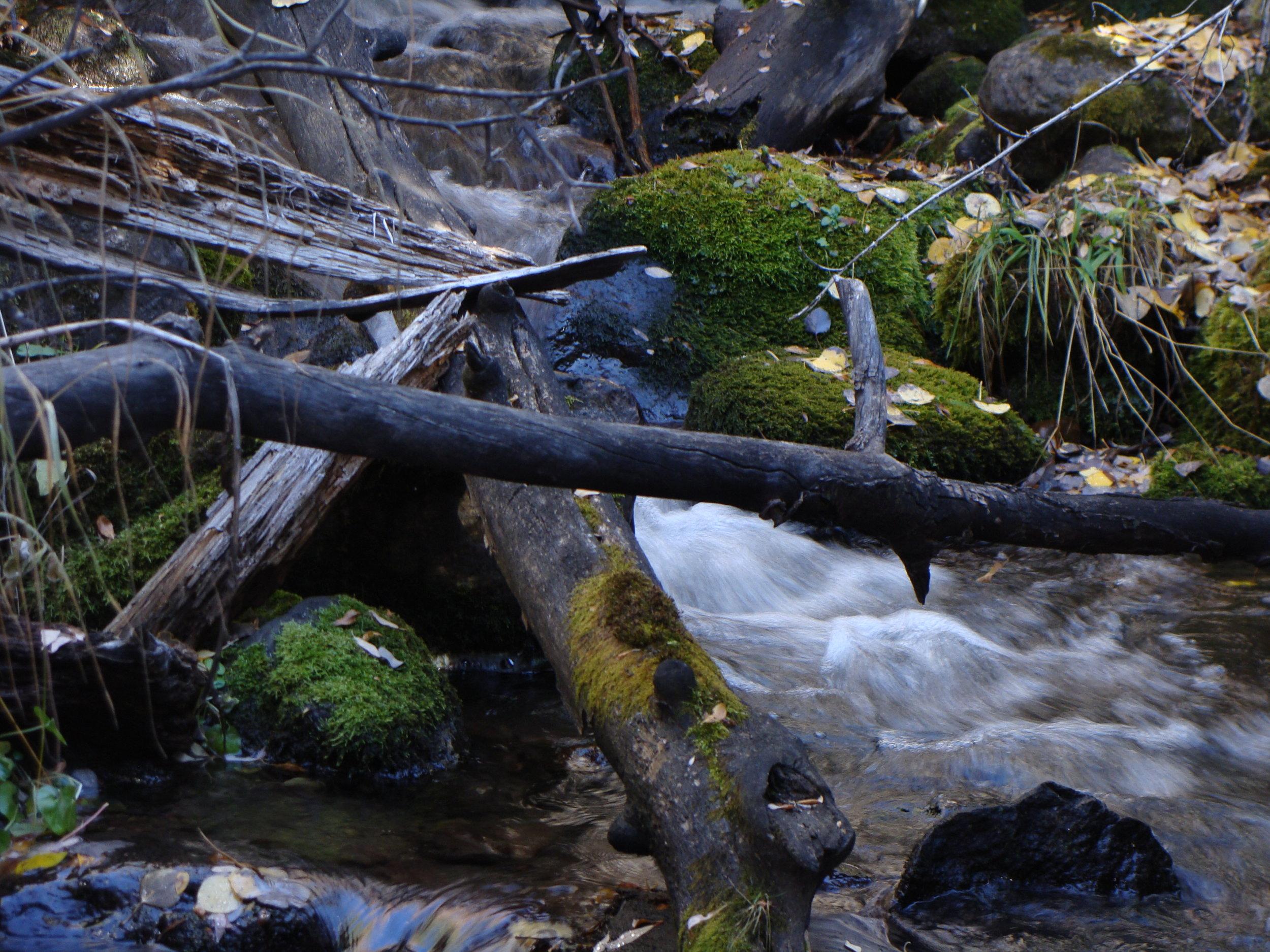 Creek Flow Contrasts