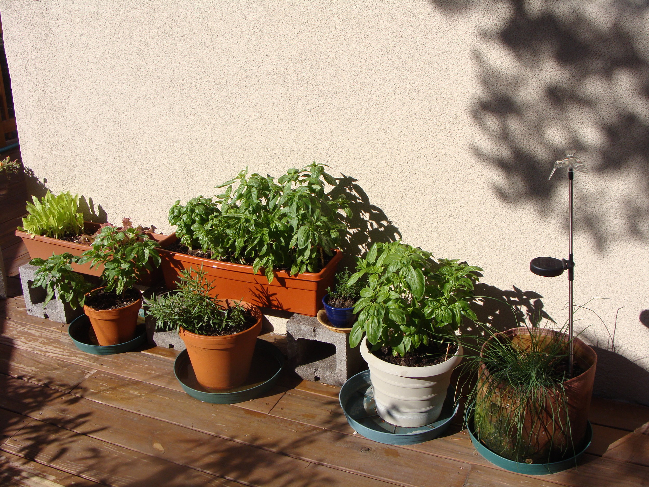 As local as it gets - my deck garden.