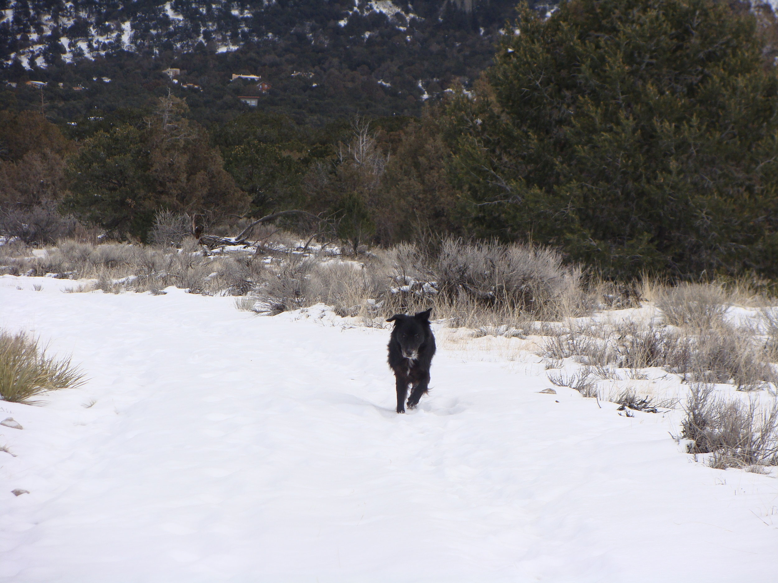 Cool Hand Luke says 'A run in the snow is always a good aim!'