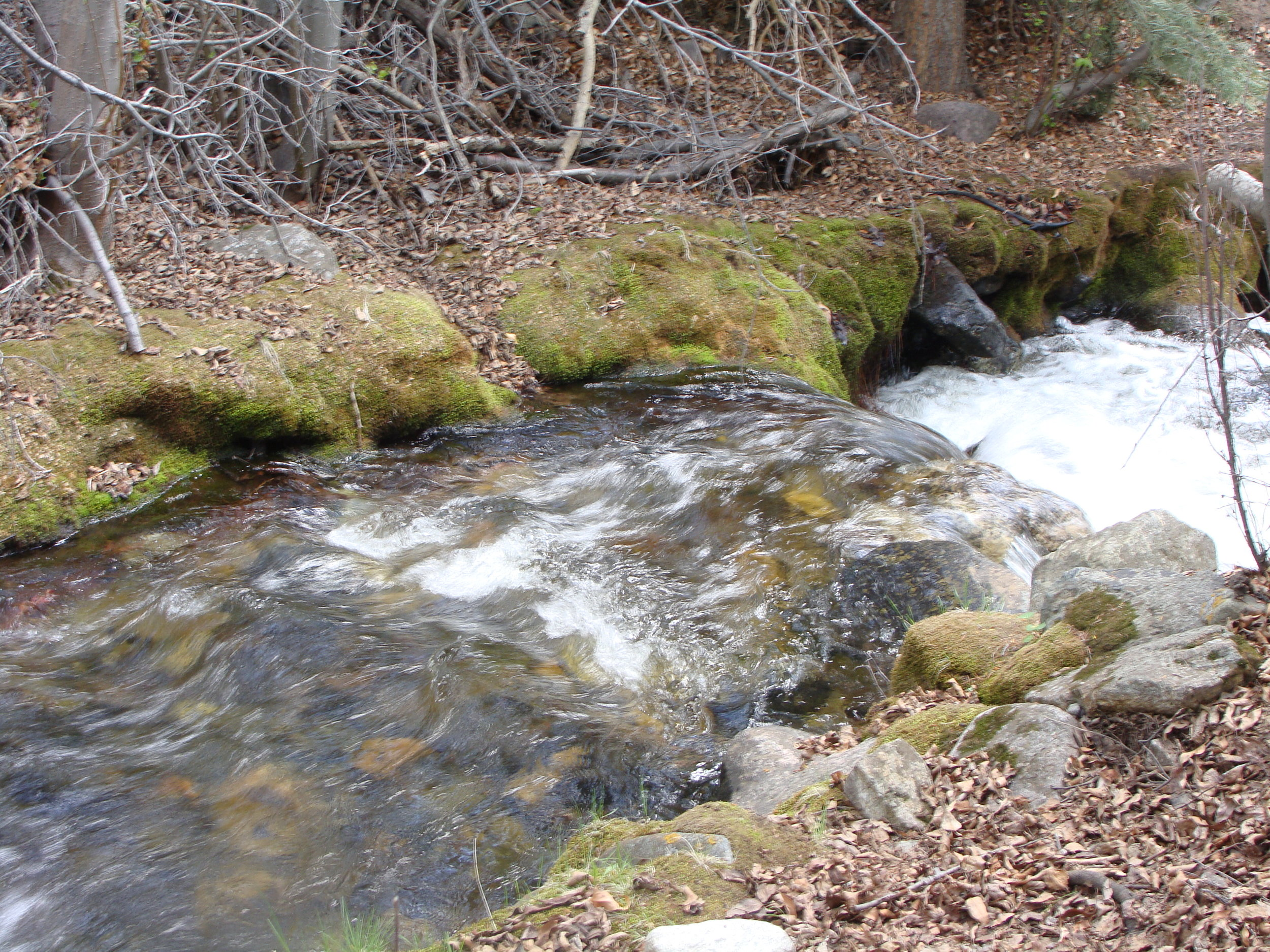 The River of Life often flows like the spring snow melt on Cottonwood Creek …