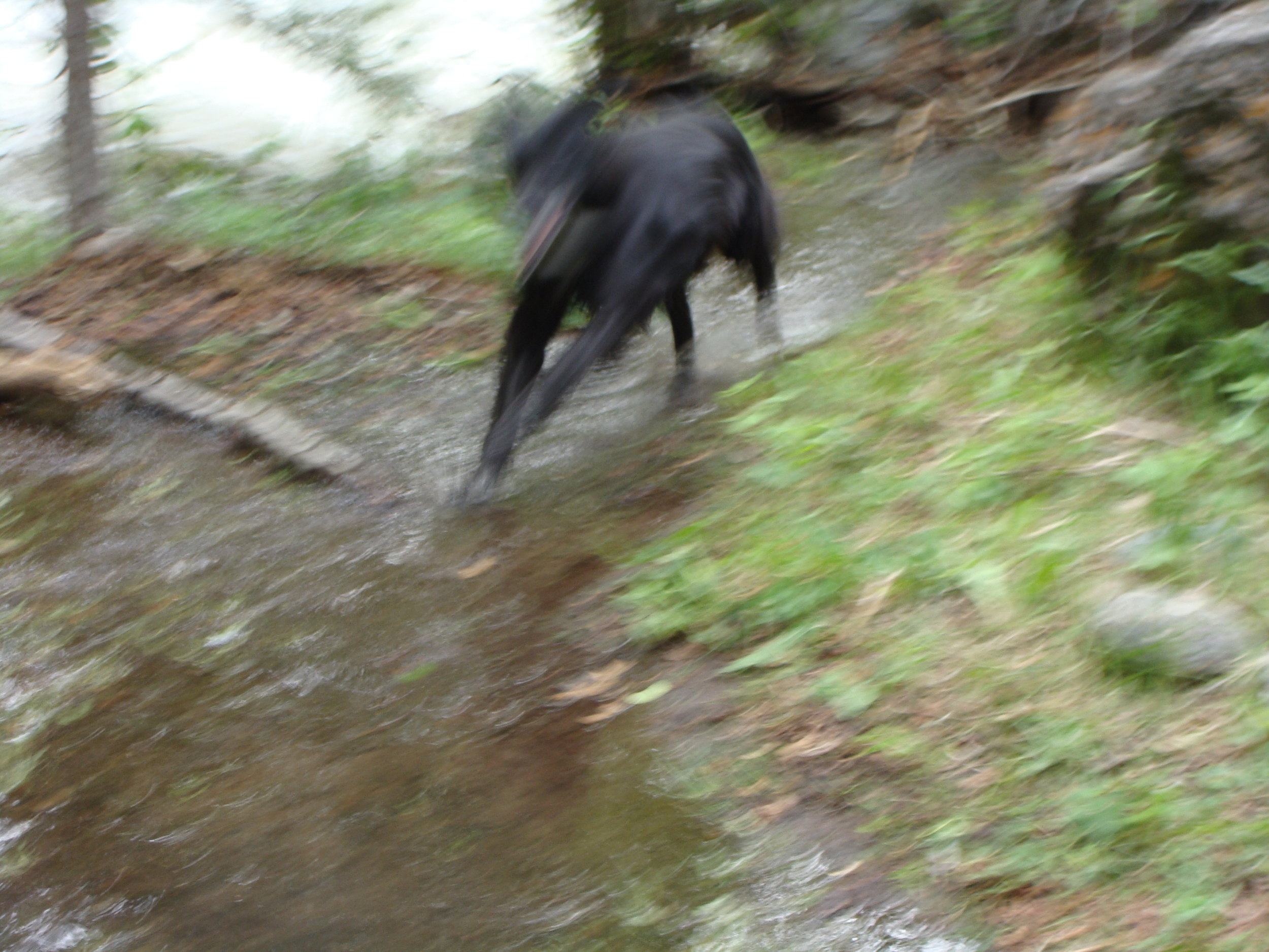 Romping Through Water on the Trail