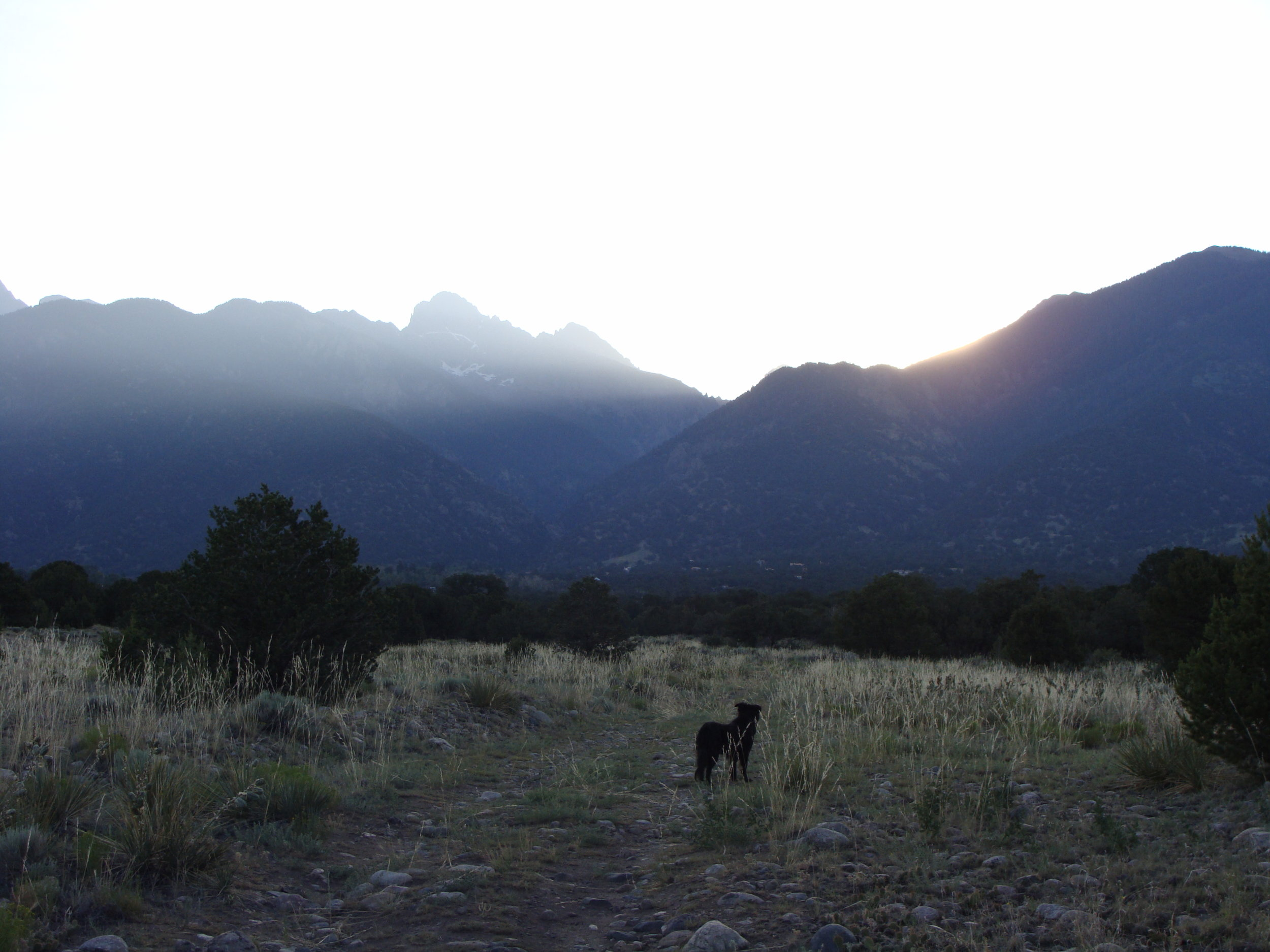 Cool Hand Luke loves being out  early as the sun peeks over the peaks!
