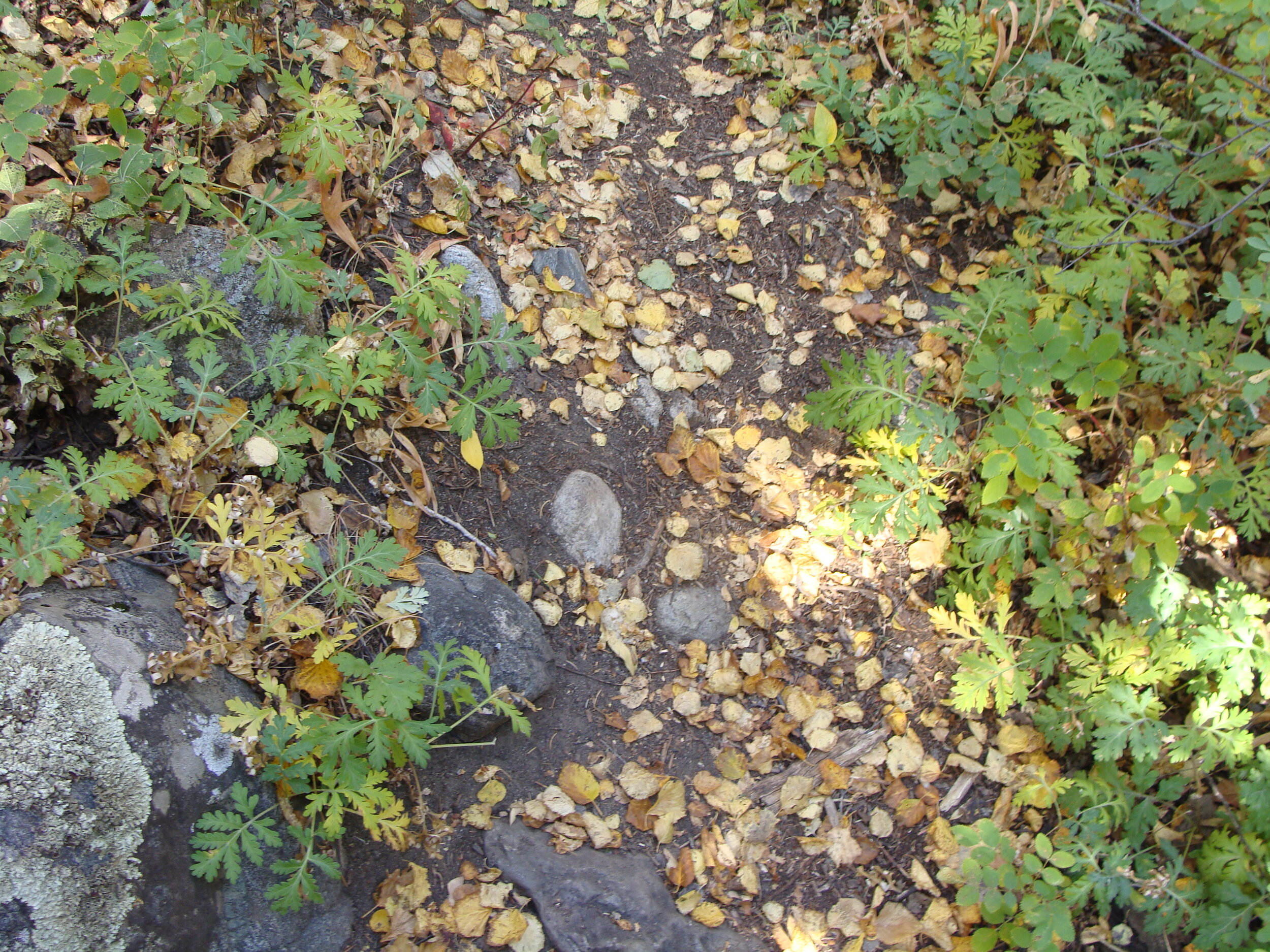 Leaves on the Trail: The Flow of Life