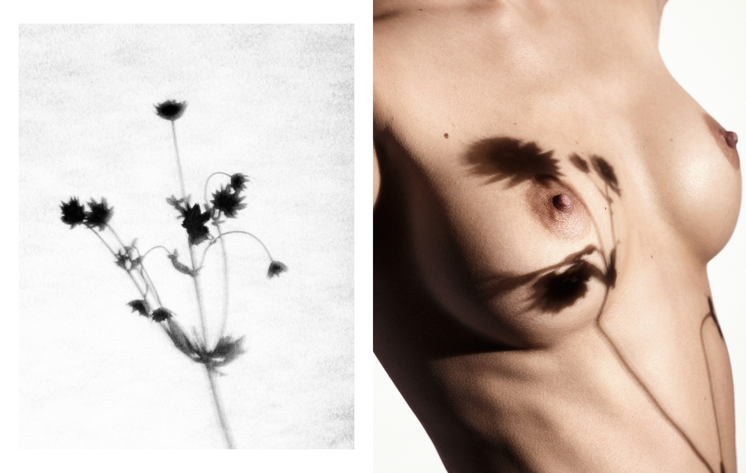 Flower_Tattoos_Layout3.jpg
