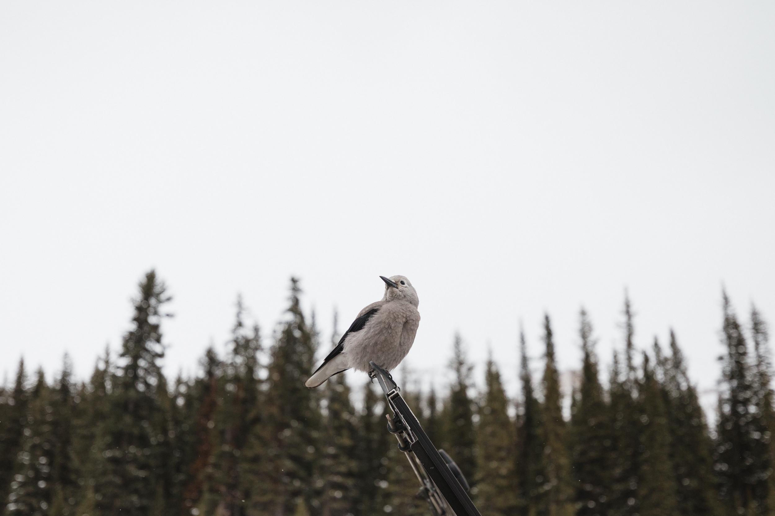 Banff_2018-16.jpg