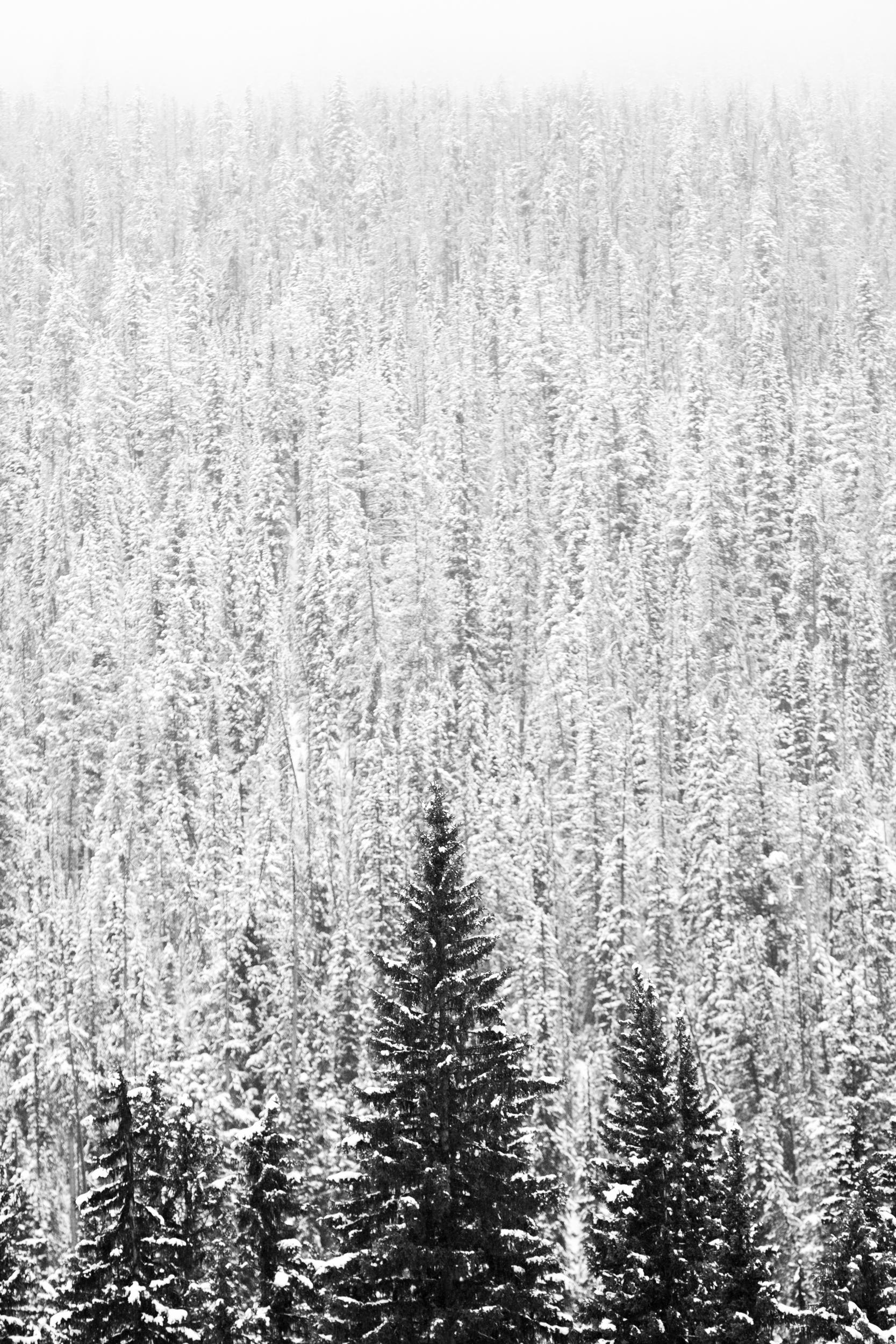 Banff_2018-13.jpg