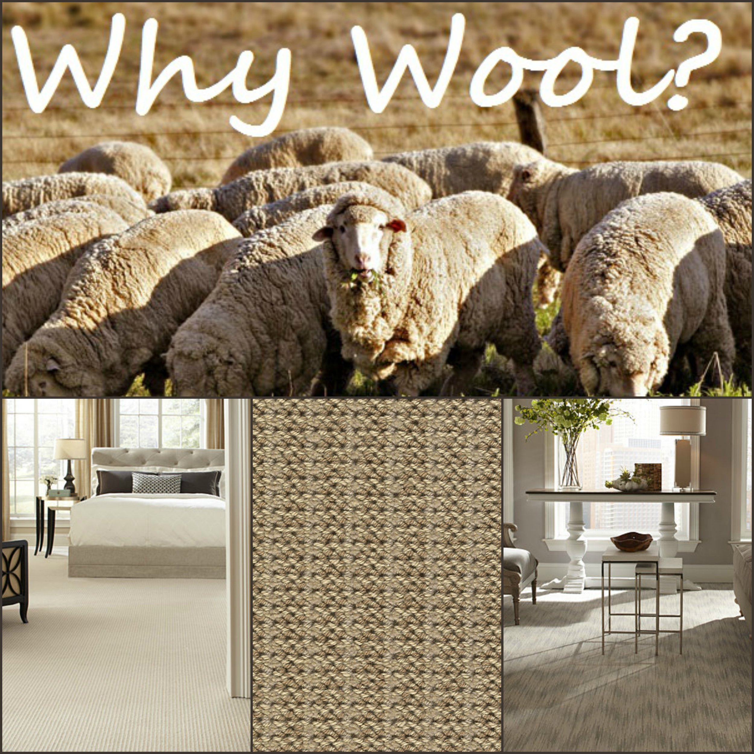 We host the largest selection of quality wool carpeting in our area featuring 100% New Zealand wool