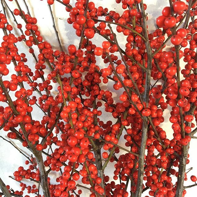 Winterberry is quintessential for holidays @portlandfarmers #christmas#holidayseason