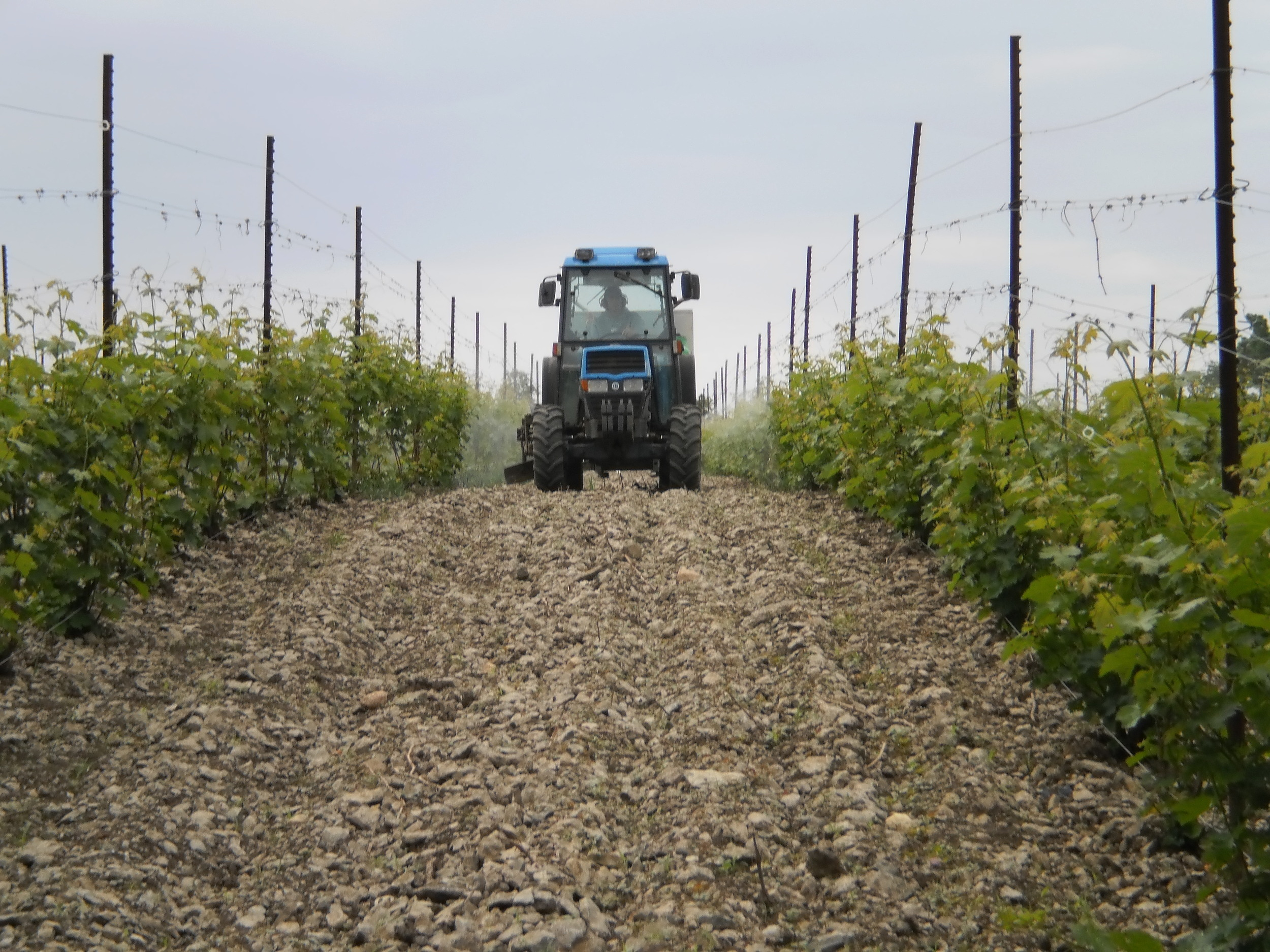 Look at this rocky Prince Edward County terroir. Makes for gorgeous wine, yet challenging vineyard maintenance.