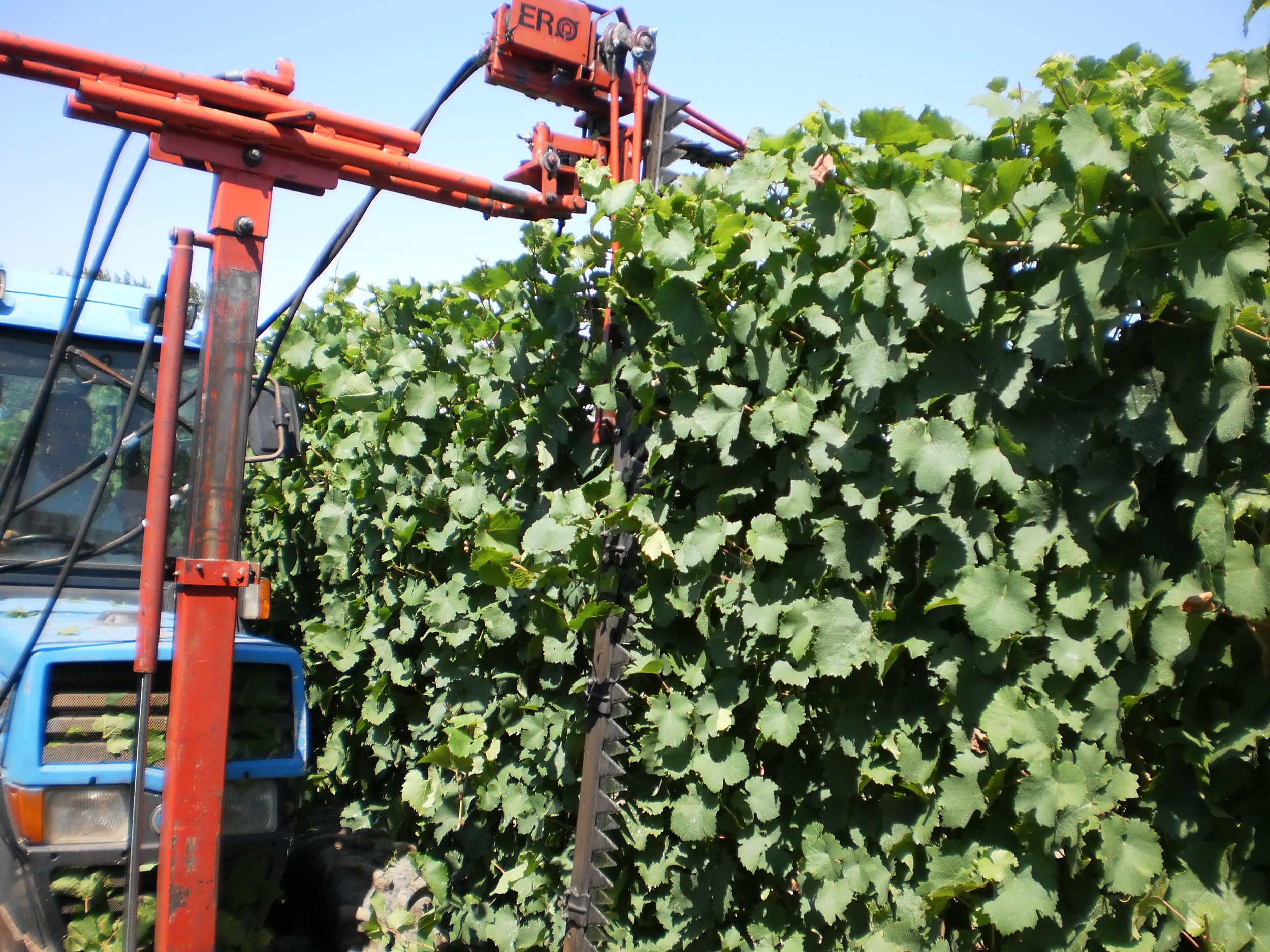 Our hydraulic hedger keeps vines neat and tidy with minimal fuss.