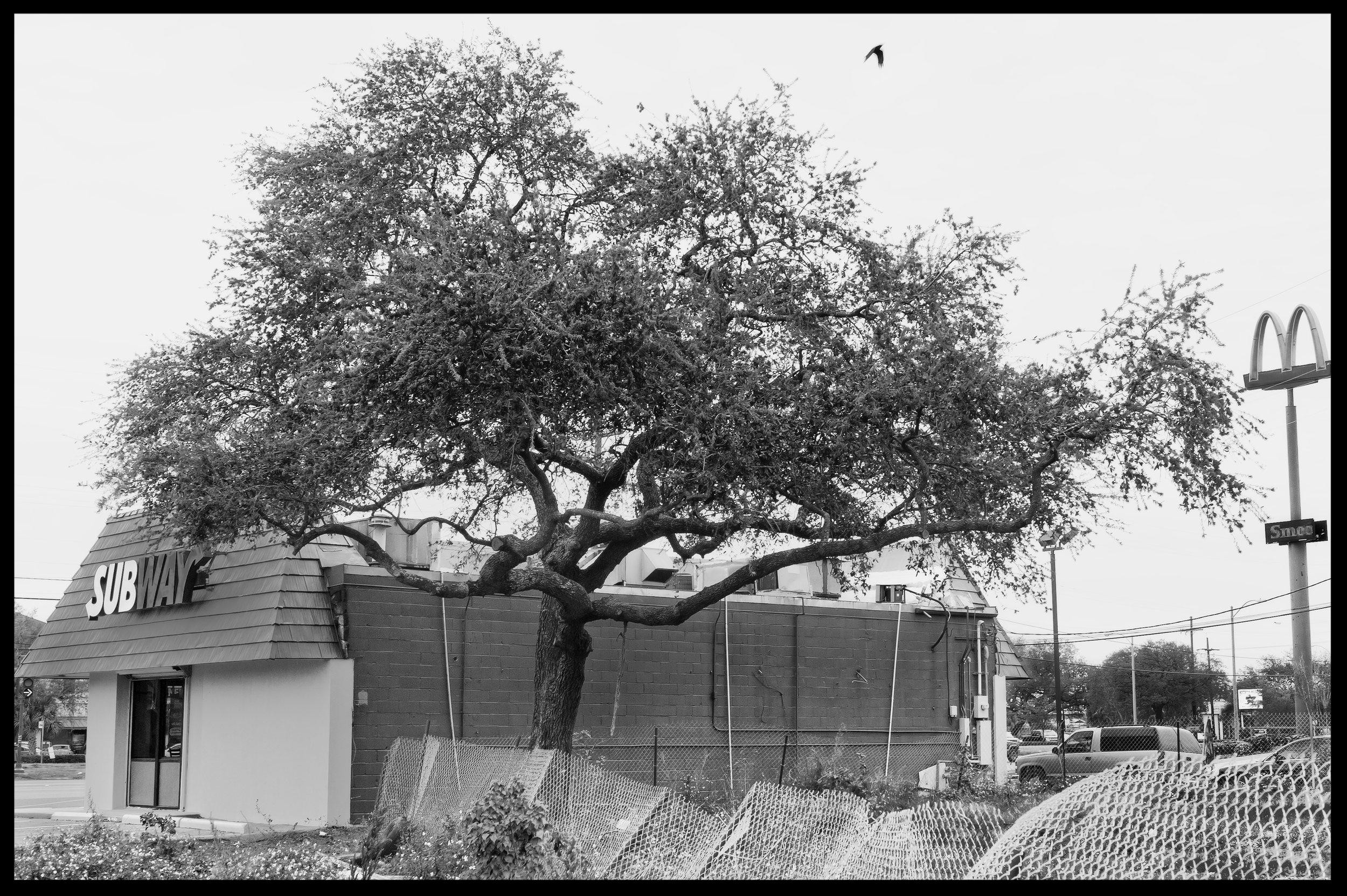 subway tree.jpg