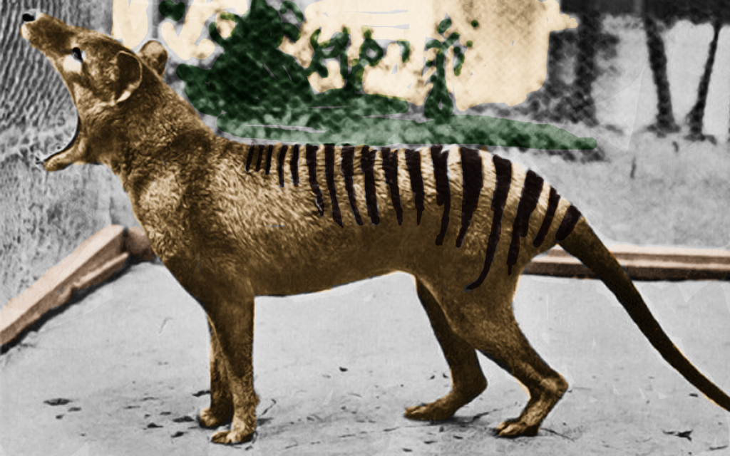 yawning_thylacine_in_color_by_pudgemountain-d77yirz.png