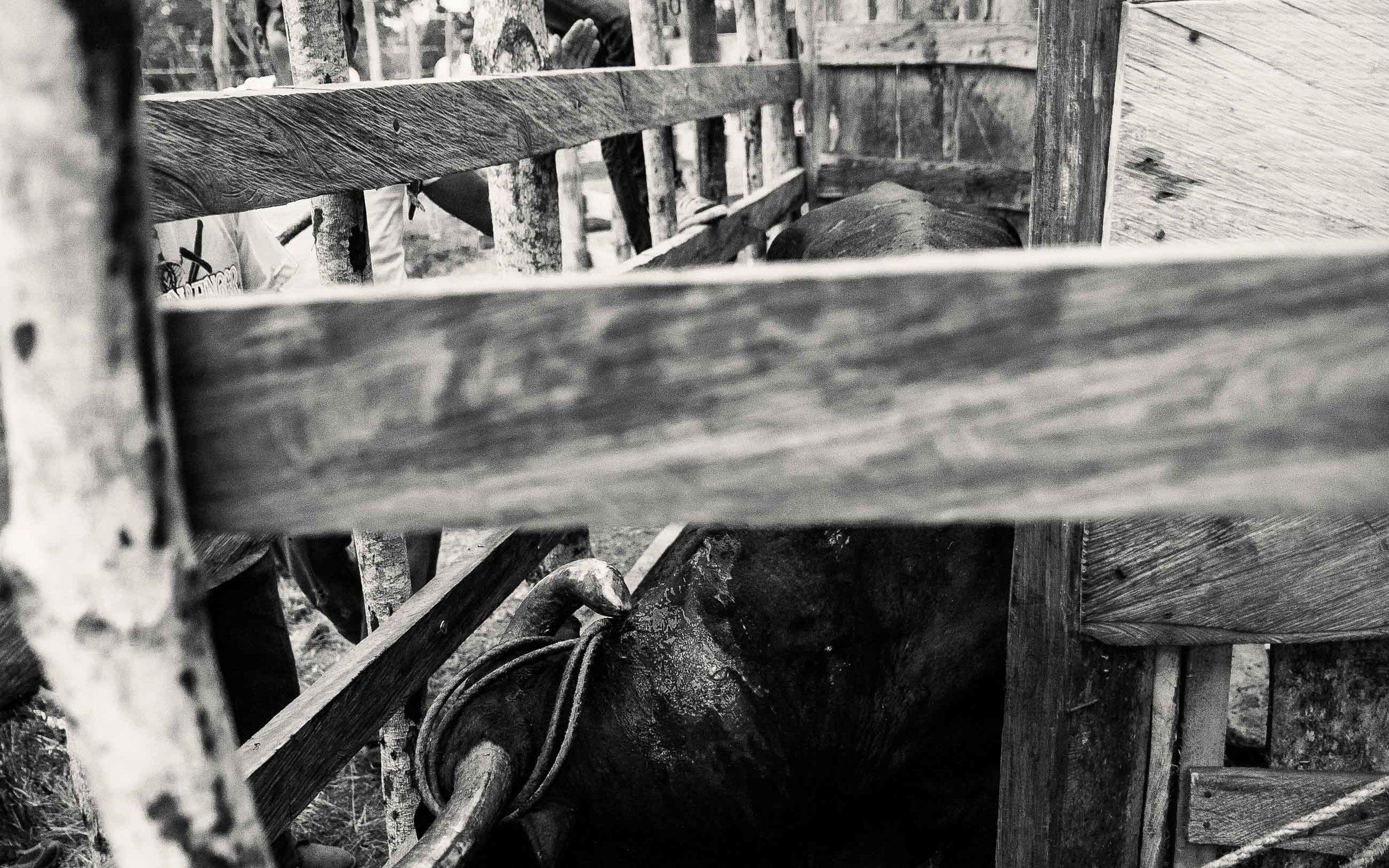 """""""Aquí se juega con los toros compadre, uno no les tira a matar sino a molestarlos para que te persigan"""""""