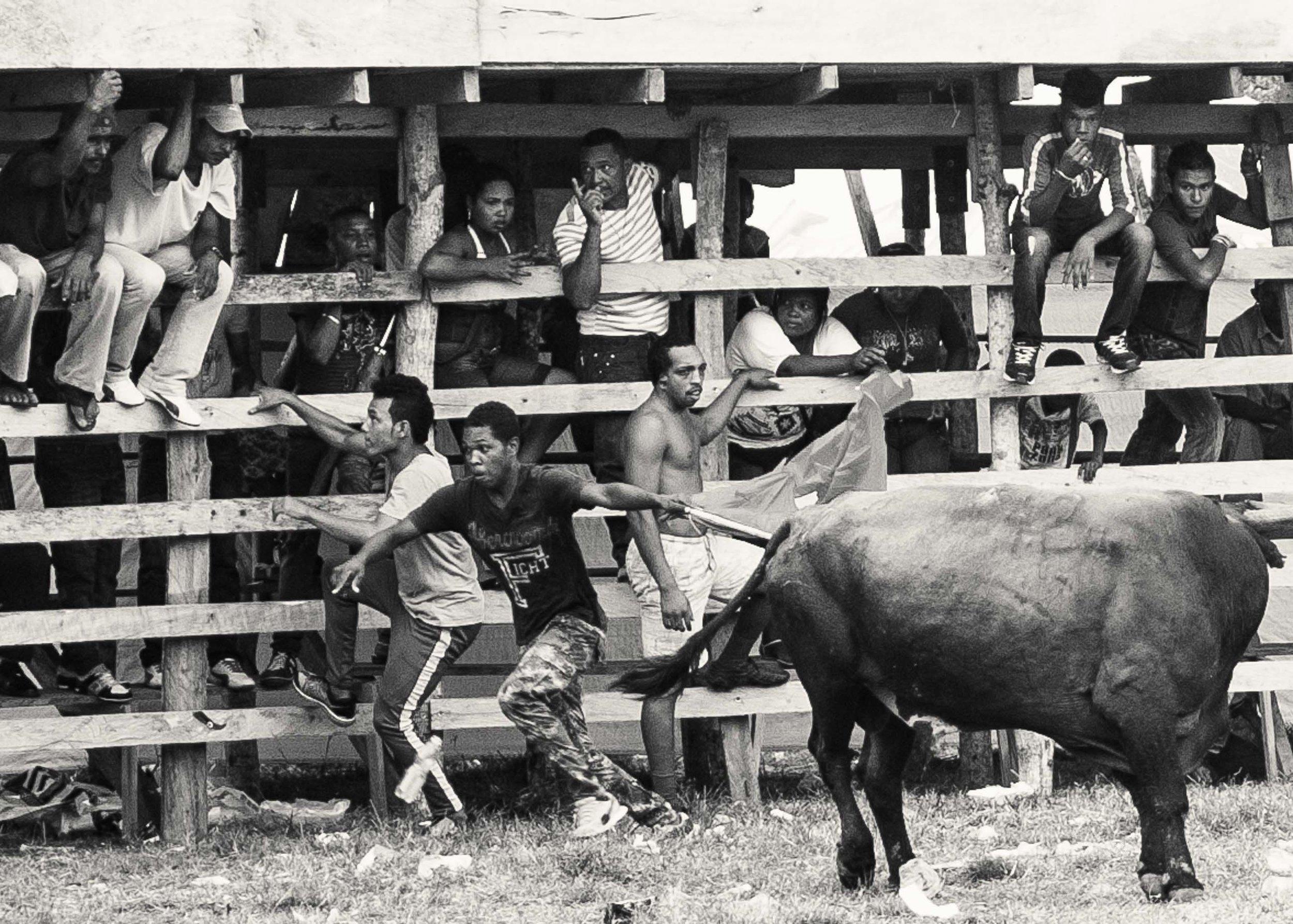 """A los toros los van rotando, 8 en total entraron y salieron, con heridas """"menores""""."""