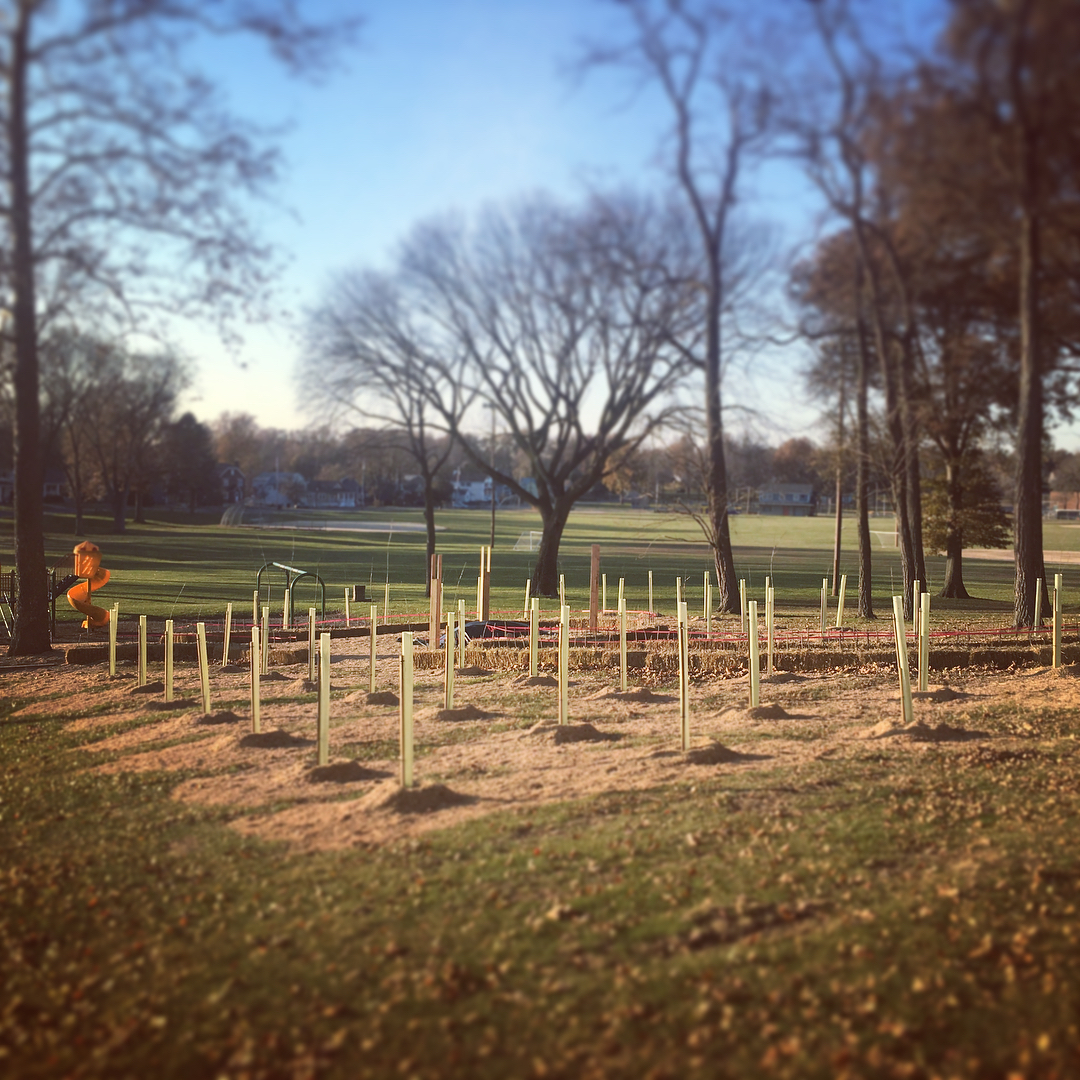 Restoration tree tubes protect the saplings until they grow