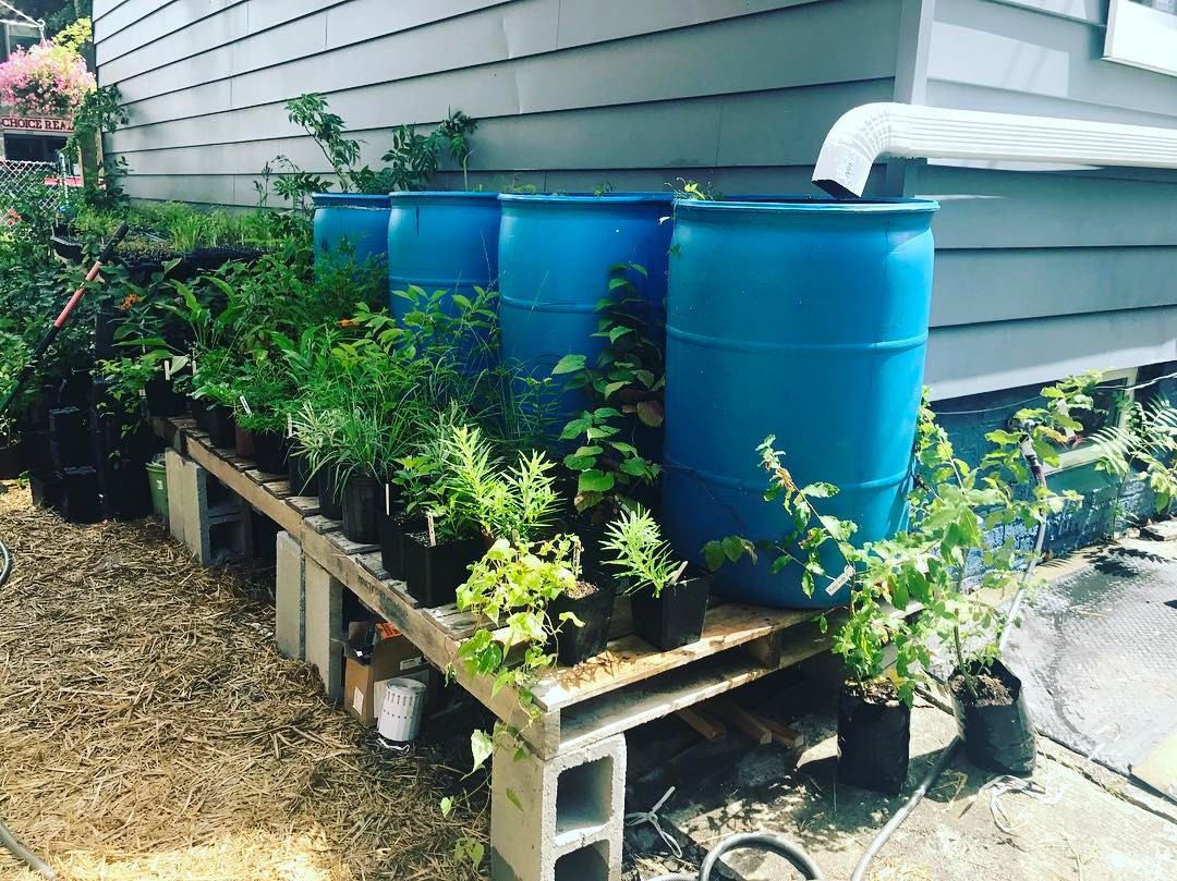 This four bin rain barrel system is used for irrigation and to dry out a building's basement