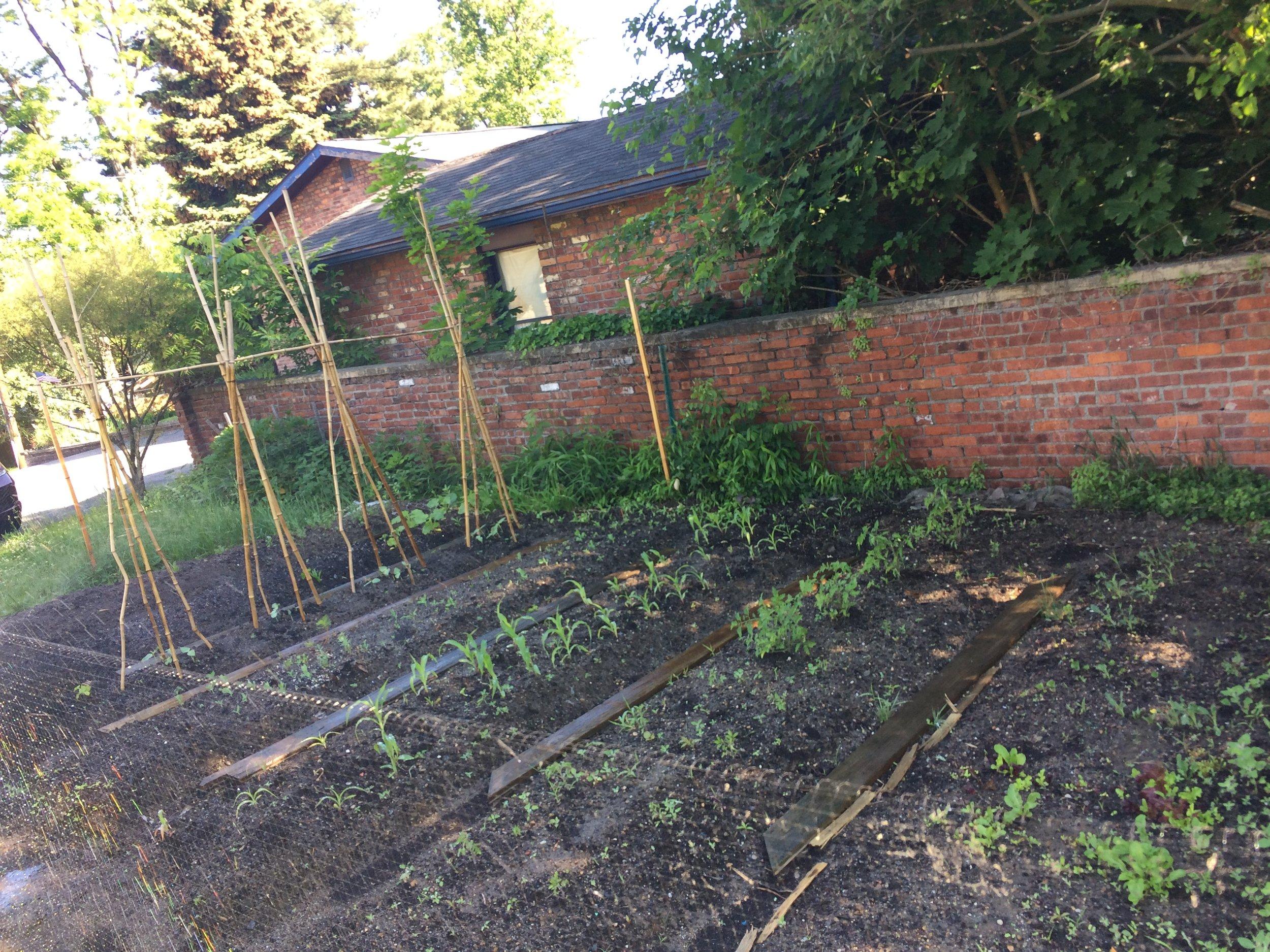 2013 Vegetable Garden (June)