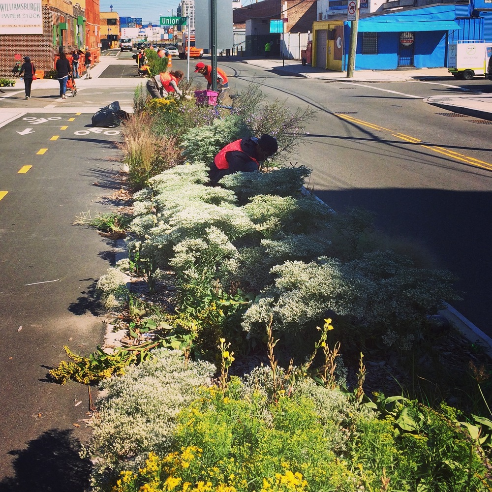 The Brooklyn Greenway planted with a biodiverse perennial border.