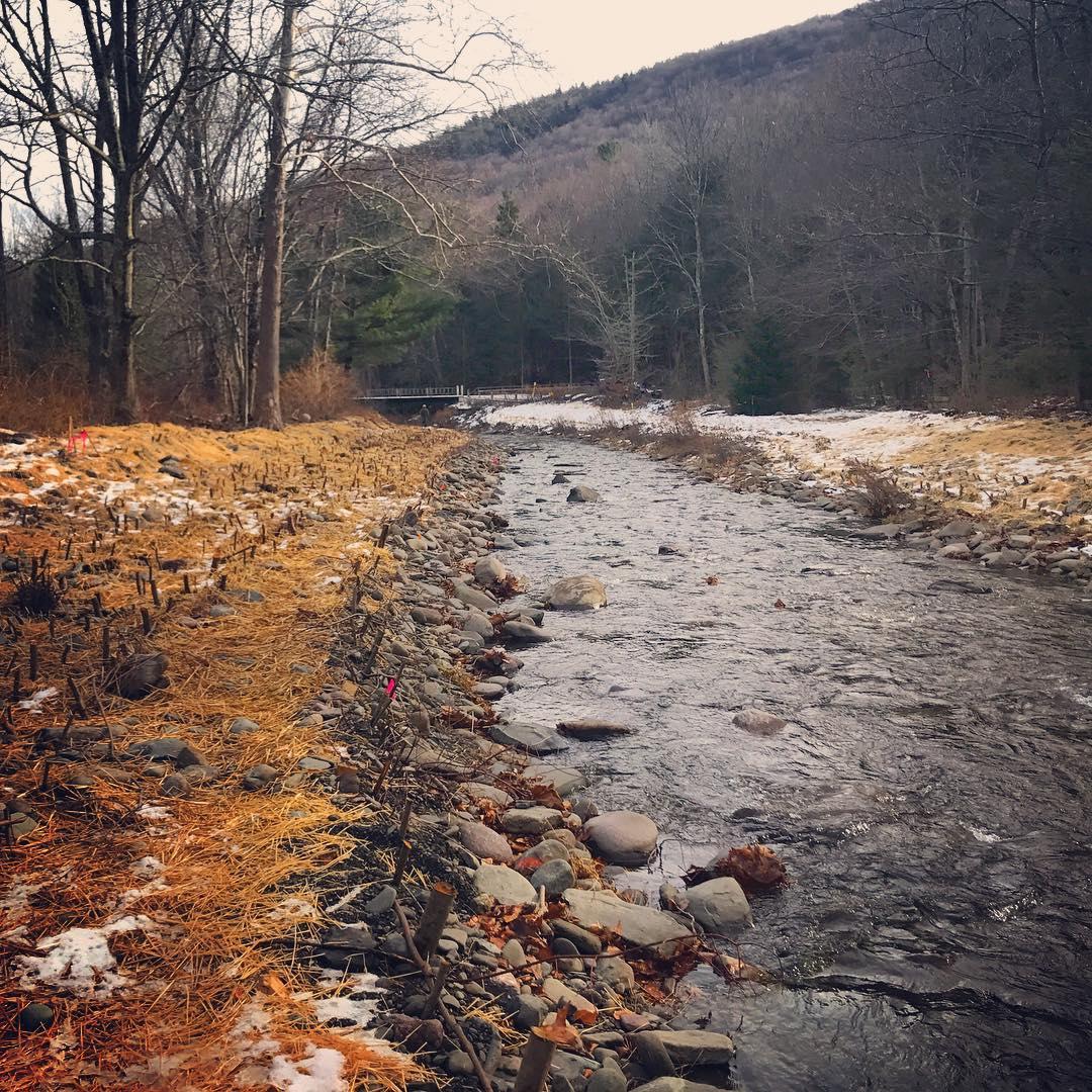 Using bio-engineering for shoreline stabilization and riparian restoration