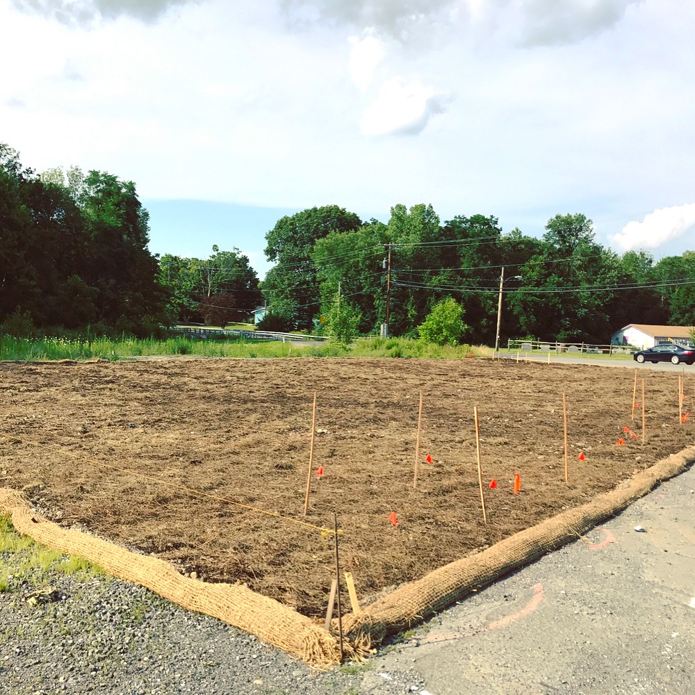 …to new soil layer…