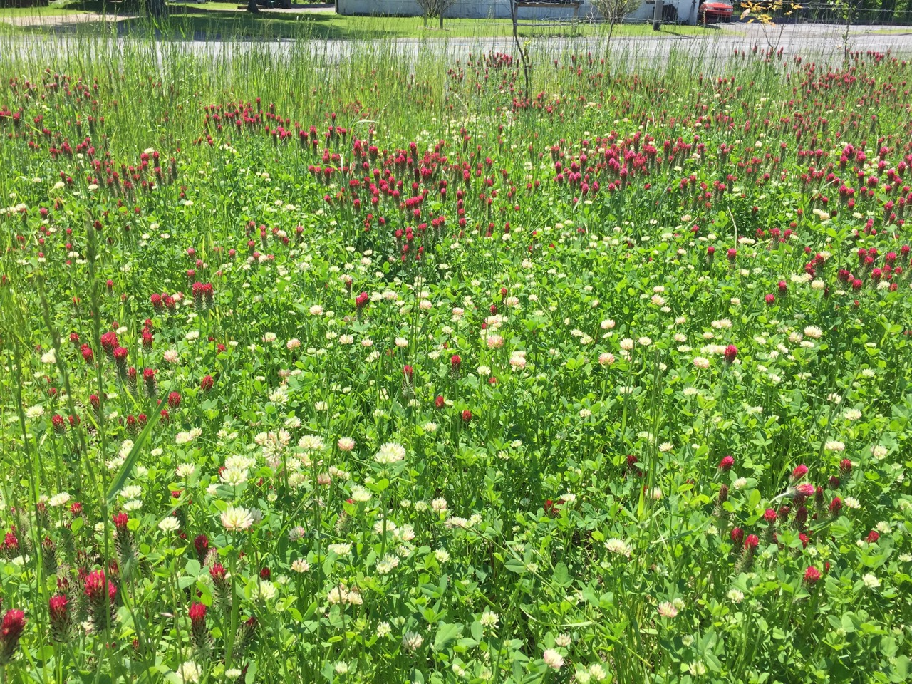 …to thriving wildflower meadow!