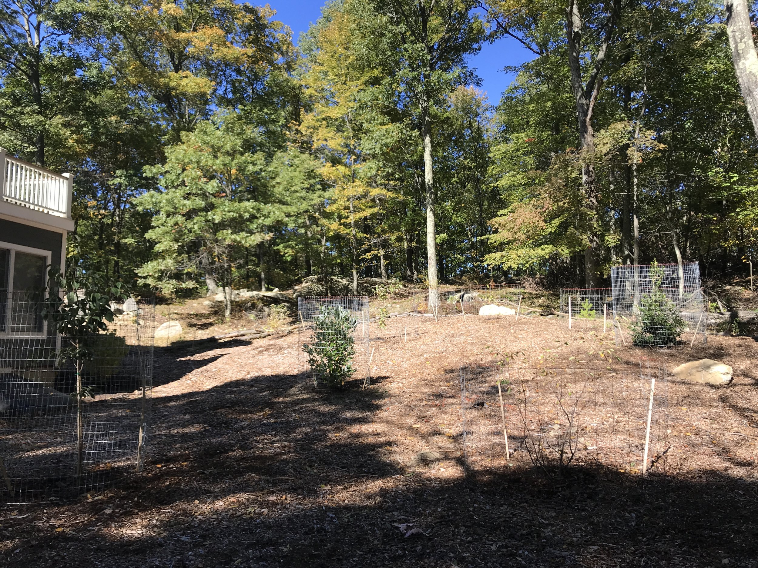 Native trees added to the perennial garden. The temporary fencing protects from deer browse as the trees establish and grow.