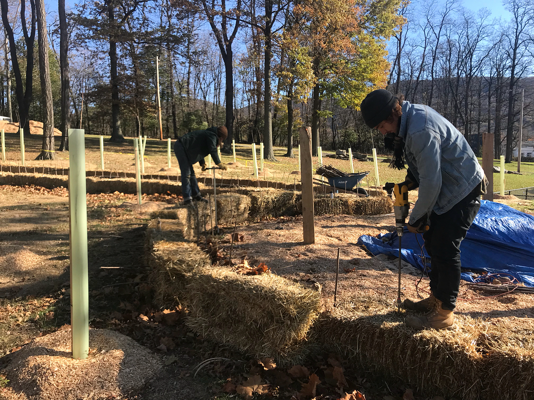 Installing sandbar willow live stakes in a woodland playground