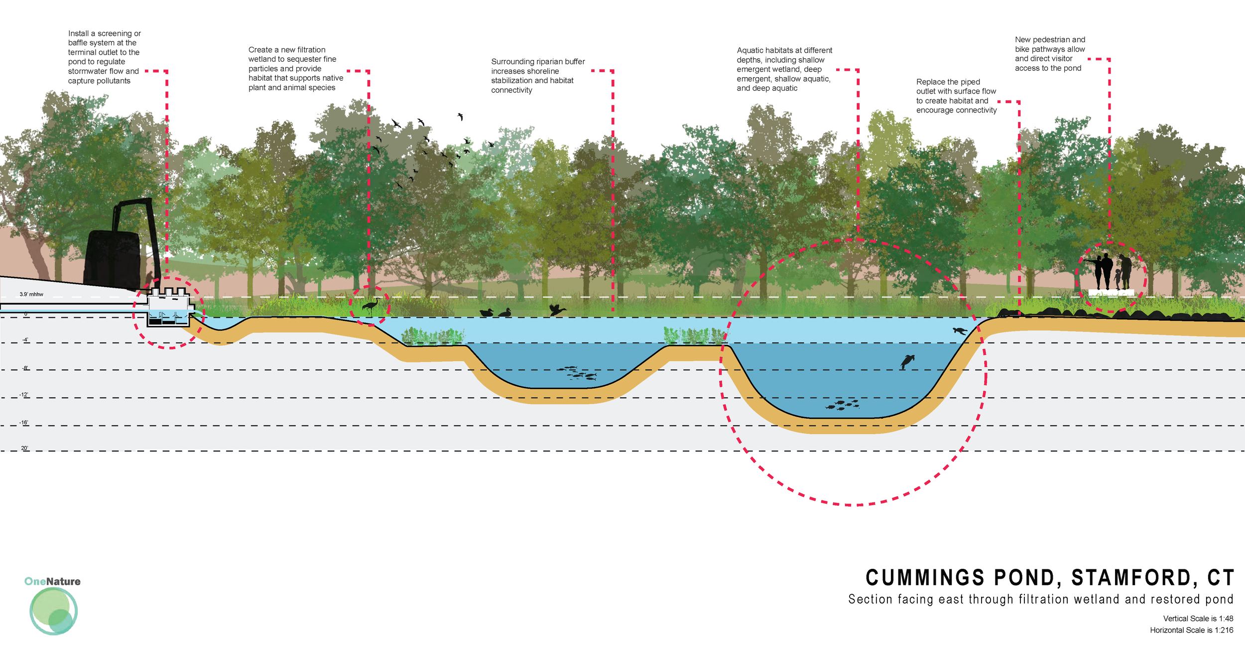 cummings pond section labelled Rv2.png