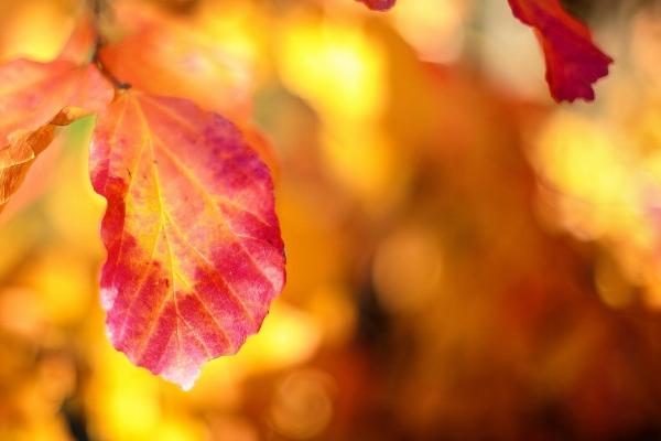 last leaf.jpg