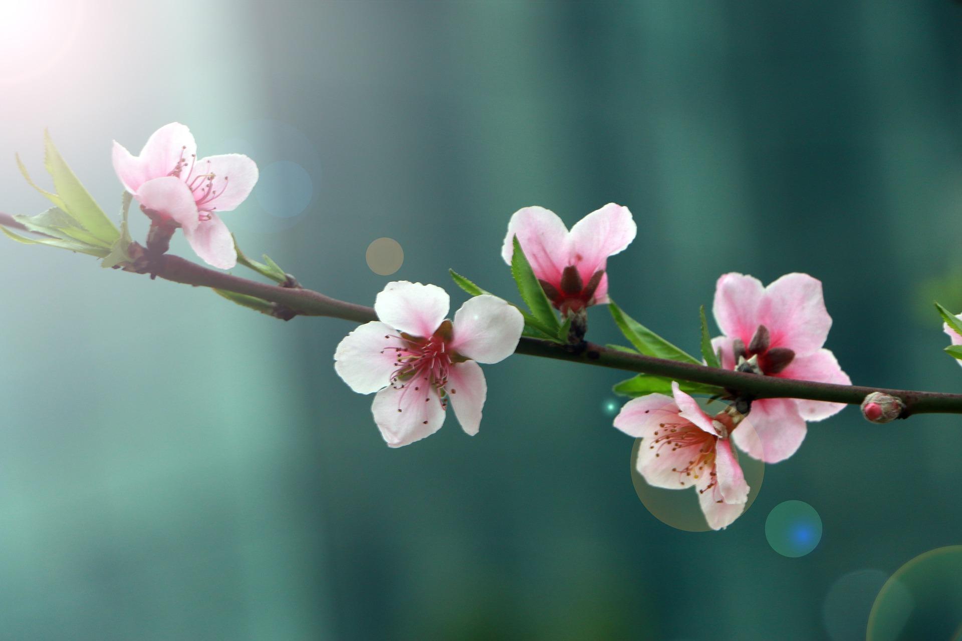 spring-2395218_1920.jpg