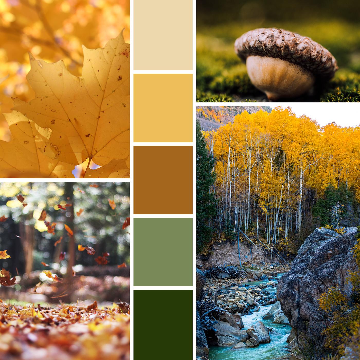 Mood Boards: Falling into Fall  |  Hue & Tone Creative