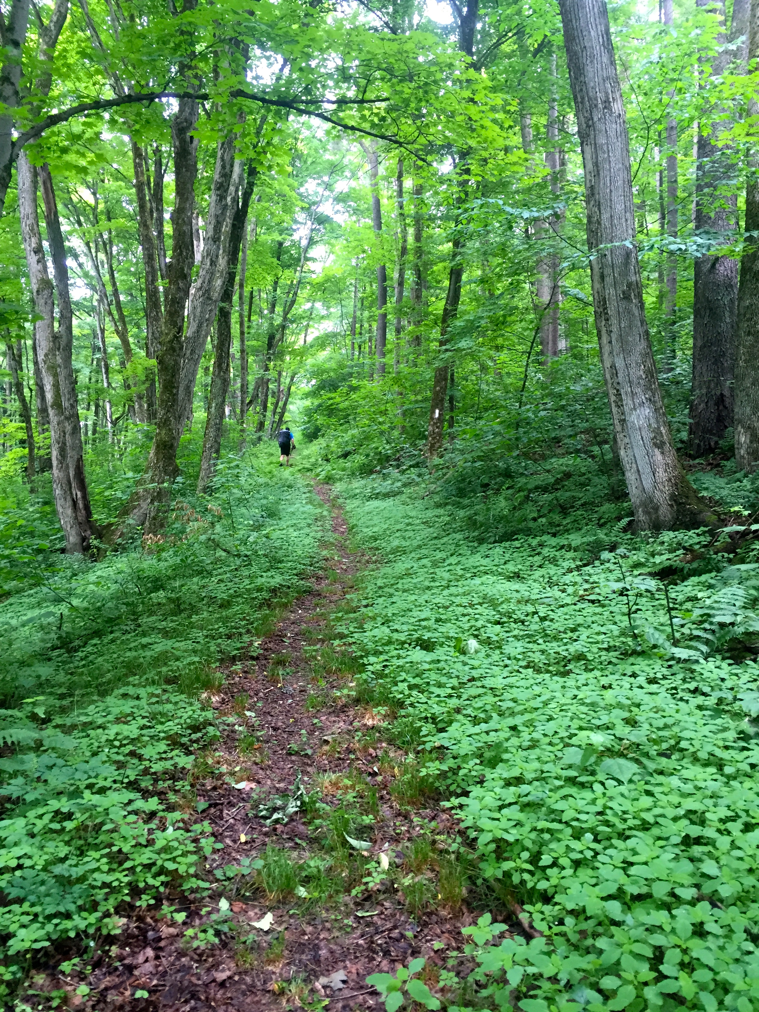 Some dry-ish portions of trail today... it sure is pretty when everything is so green!