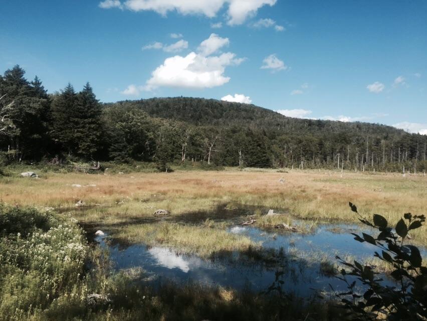 Roaring Branch Pond