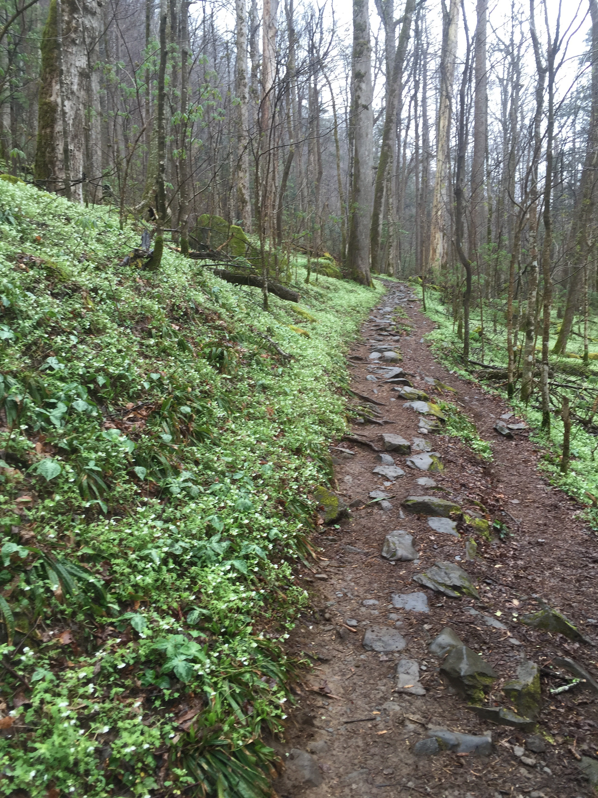 Hiking up Porters Creek Trail in the misty rain.