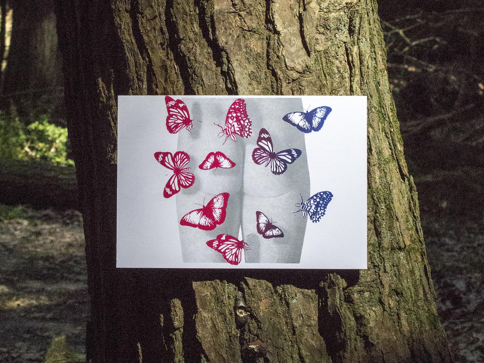 Butterflies_Pines.jpg