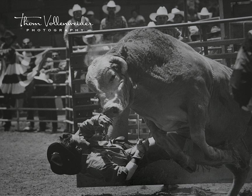 facebook_bull_rider_0179.jpg