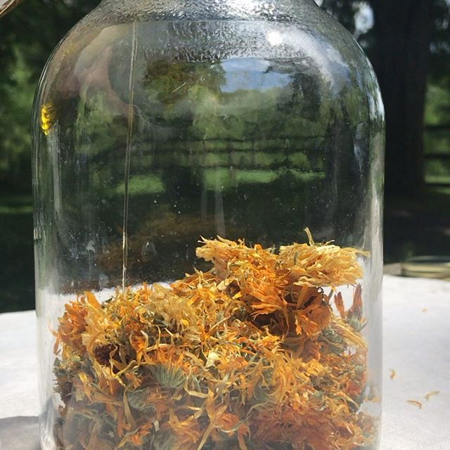 Bottling sunshine on this gorgeous Solstice. Calendula flowers infused in organic olive oil capturing the brightness of these long days. Once ready, it will become one of the star ingredients in Quiet the Itch, the perfect remedy for summer skin. Not only a great alternative to conventional afterbite lotions for the season's inevitable bug bites, it also calms and cools all manner of red, rashy skin. (Though not, please, skin with open wounds.) Find it through the link in bio. 🌼🌻🌞☀️🌝