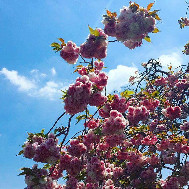 Prefect sky perfect flower fluff ball