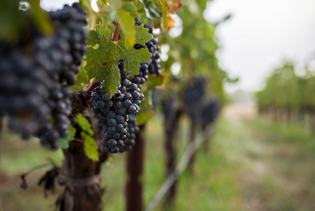 Harvest 2015-9196 WEB.jpg