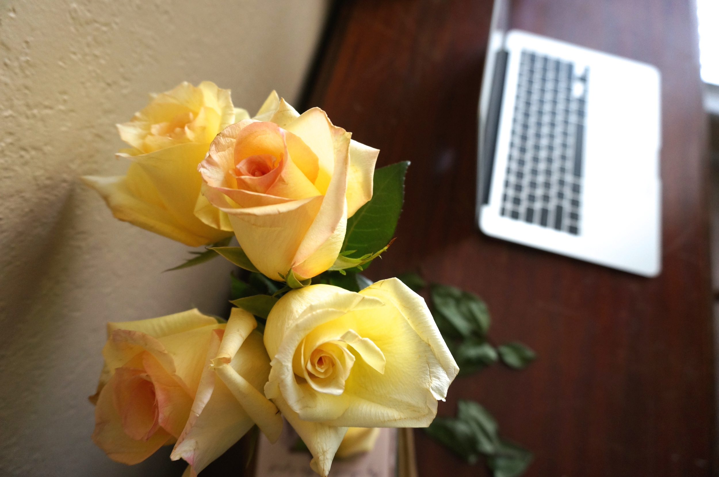 Gorgeous fresh yellow roses for inspiration and happiness.