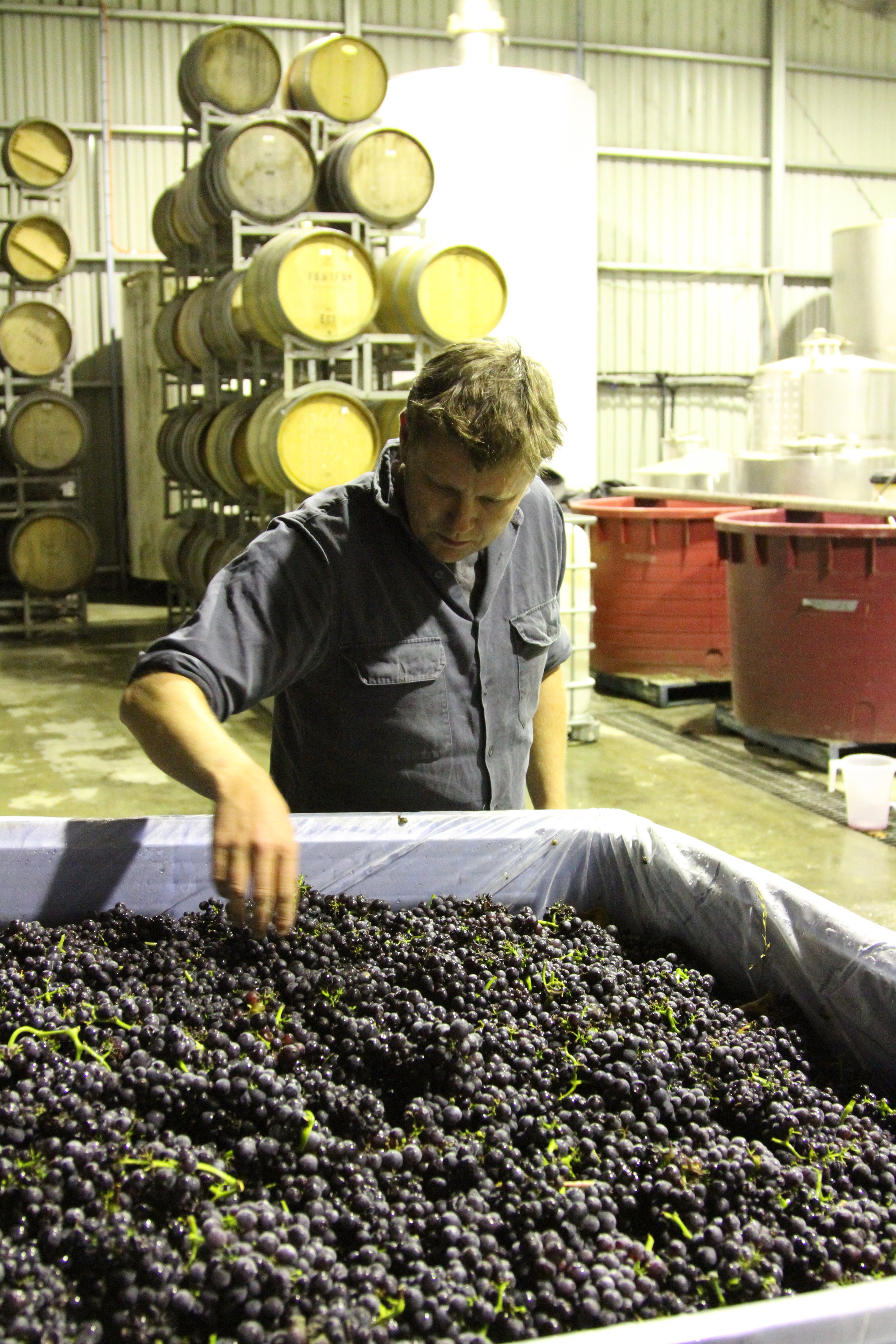 Jules inspects fruit at Holm Oak, 2012