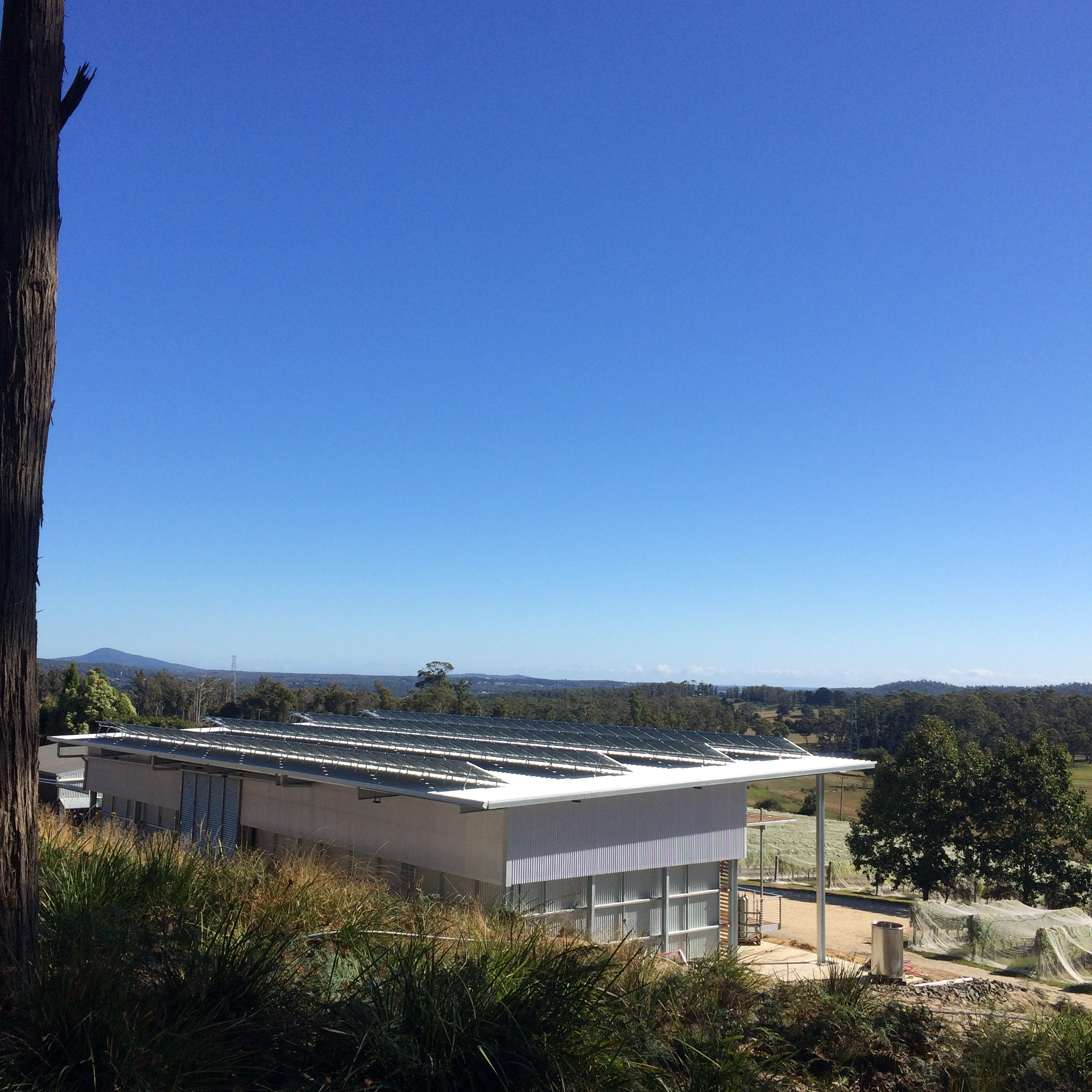 Warm, sunny Autumn days were a welcome start to vintage. We were ready to make wine, powered by the sun in Tasmania's first 100% solar powered winery!