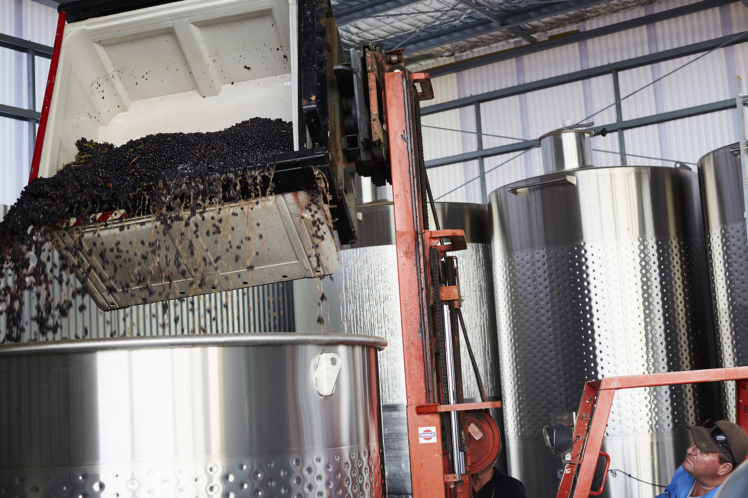 Gently tipping the fruit into the fermenter where is will stay for approximately 5 days
